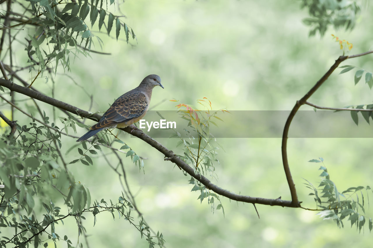bird, animals in the wild, one animal, animal themes, perching, animal wildlife, branch, tree, day, no people, nature, focus on foreground, outdoors, beauty in nature