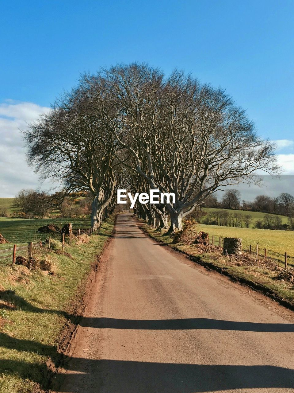 Country Road And Trees Amidst Field Against Sky