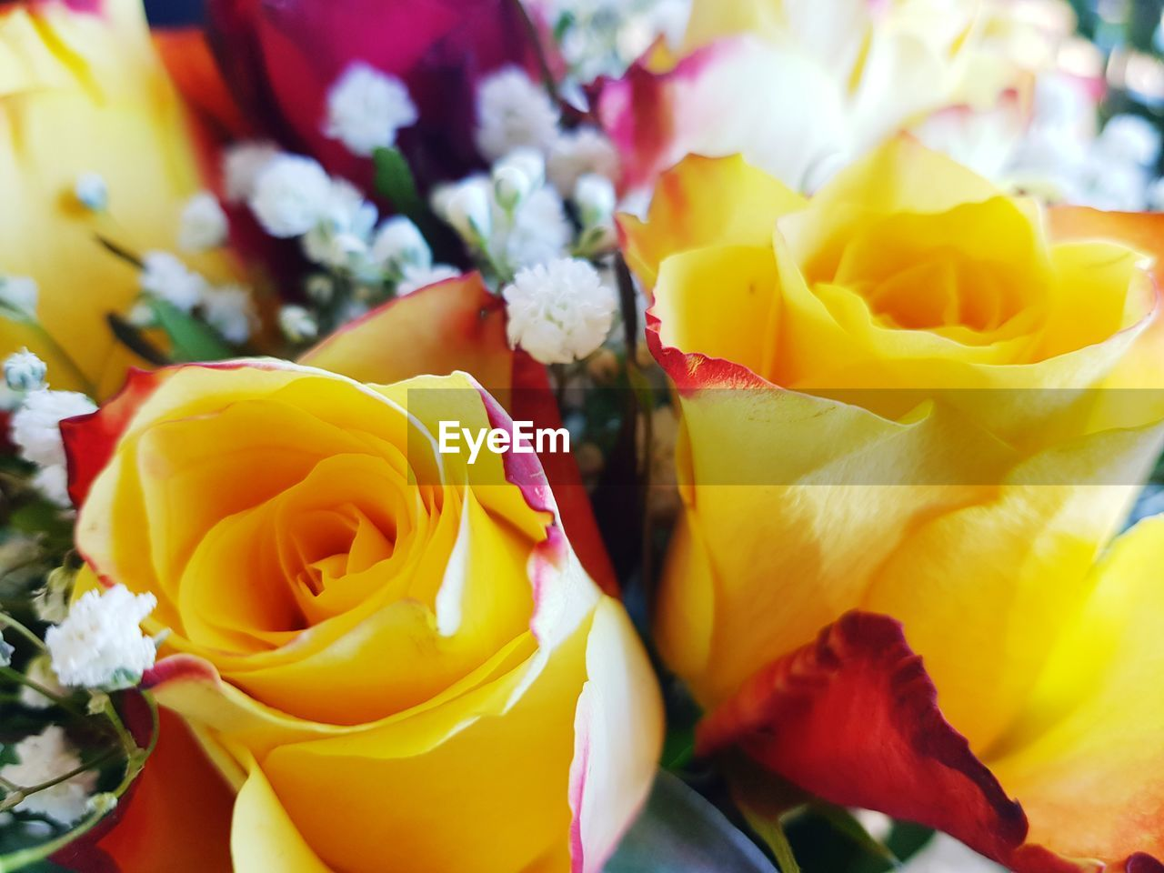 flowering plant, flower, petal, rose, plant, yellow, flower head, inflorescence, rose - flower, freshness, beauty in nature, vulnerability, fragility, close-up, nature, bouquet, flower arrangement, no people, multi colored, full frame, outdoors, softness