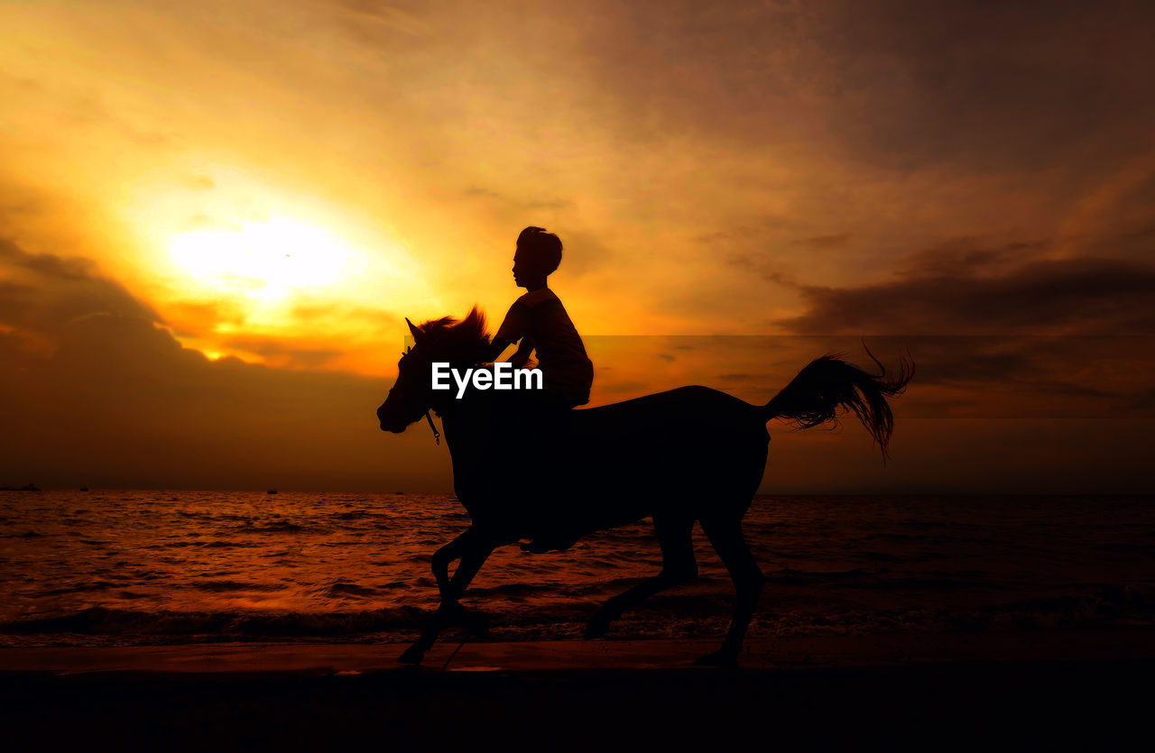 sunset, silhouette, horse, sky, sea, nature, cloud - sky, one person, real people, leisure activity, horseback riding, domestic animals, outdoors, men, water, beach, lifestyles, one animal, mammal, beauty in nature, full length, riding, horizon over water, scenics, day, people