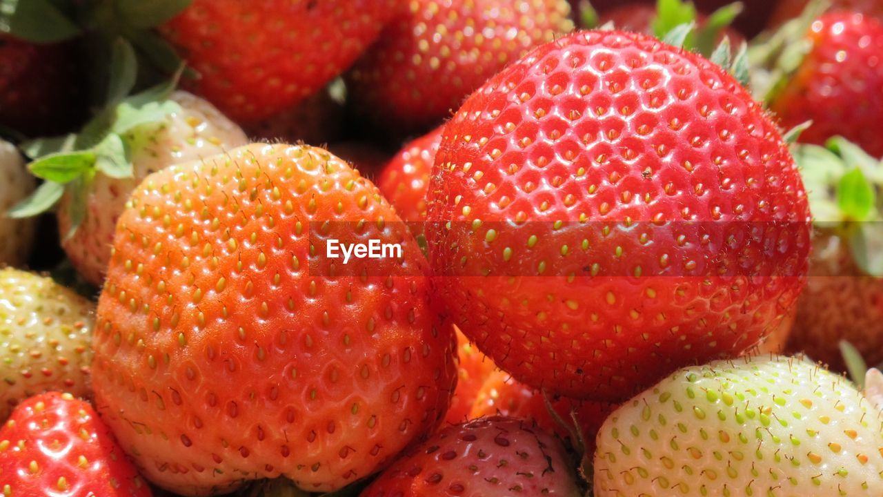 fruit, freshness, food and drink, close-up, food, healthy eating, no people, red, day, indoors
