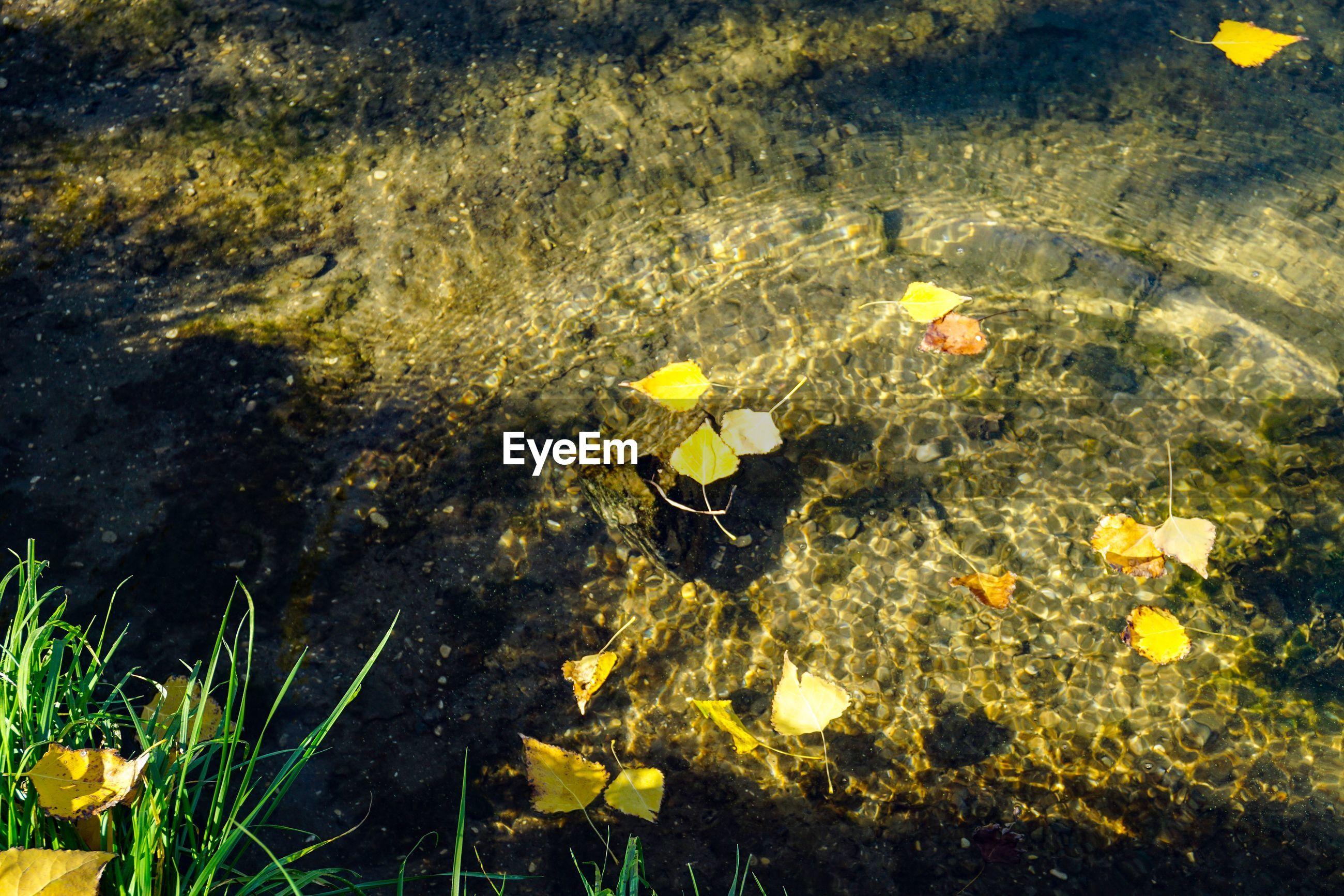HIGH ANGLE VIEW OF YELLOW FISH ON SEA