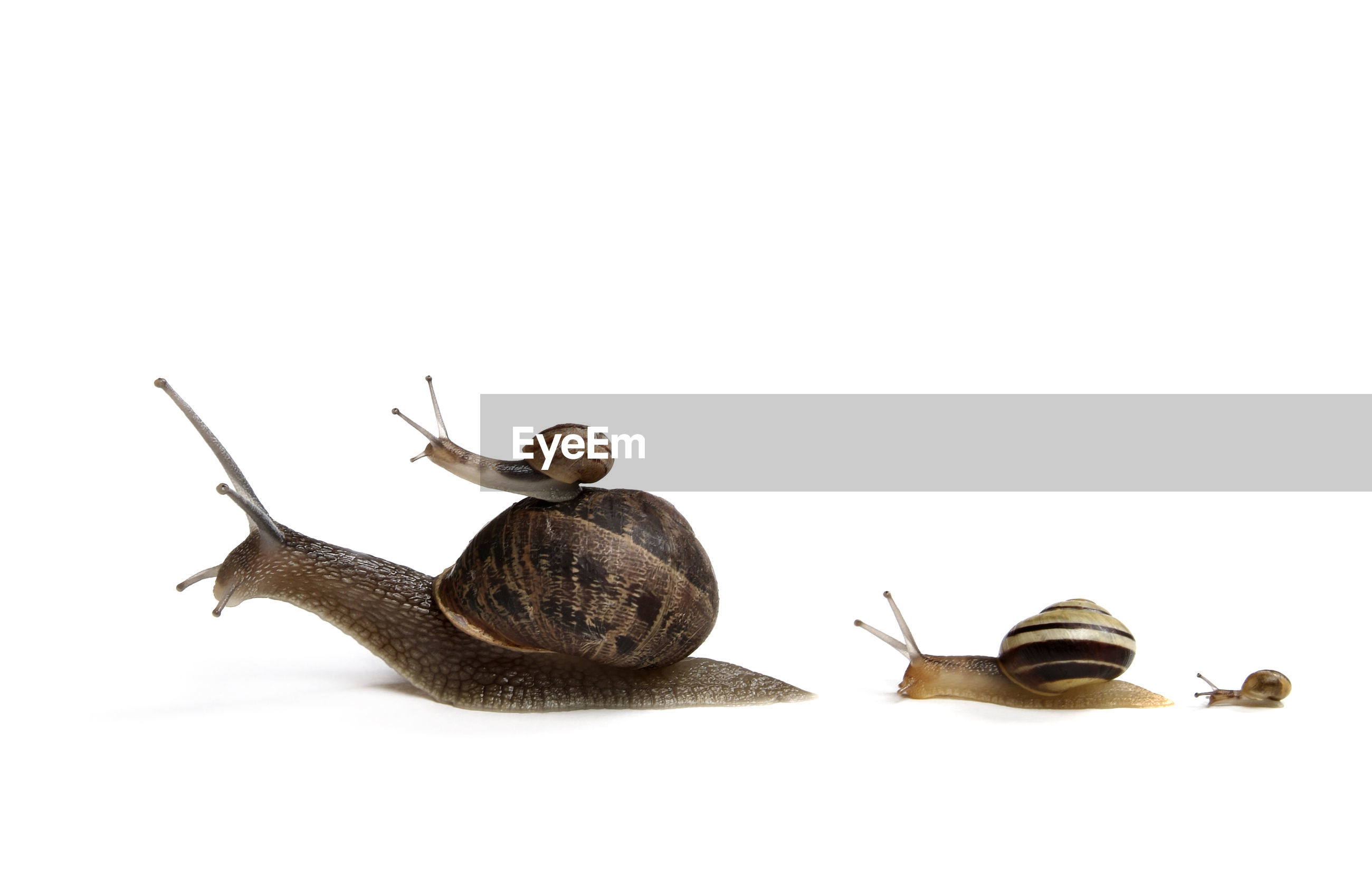 Close-up of snails over white background