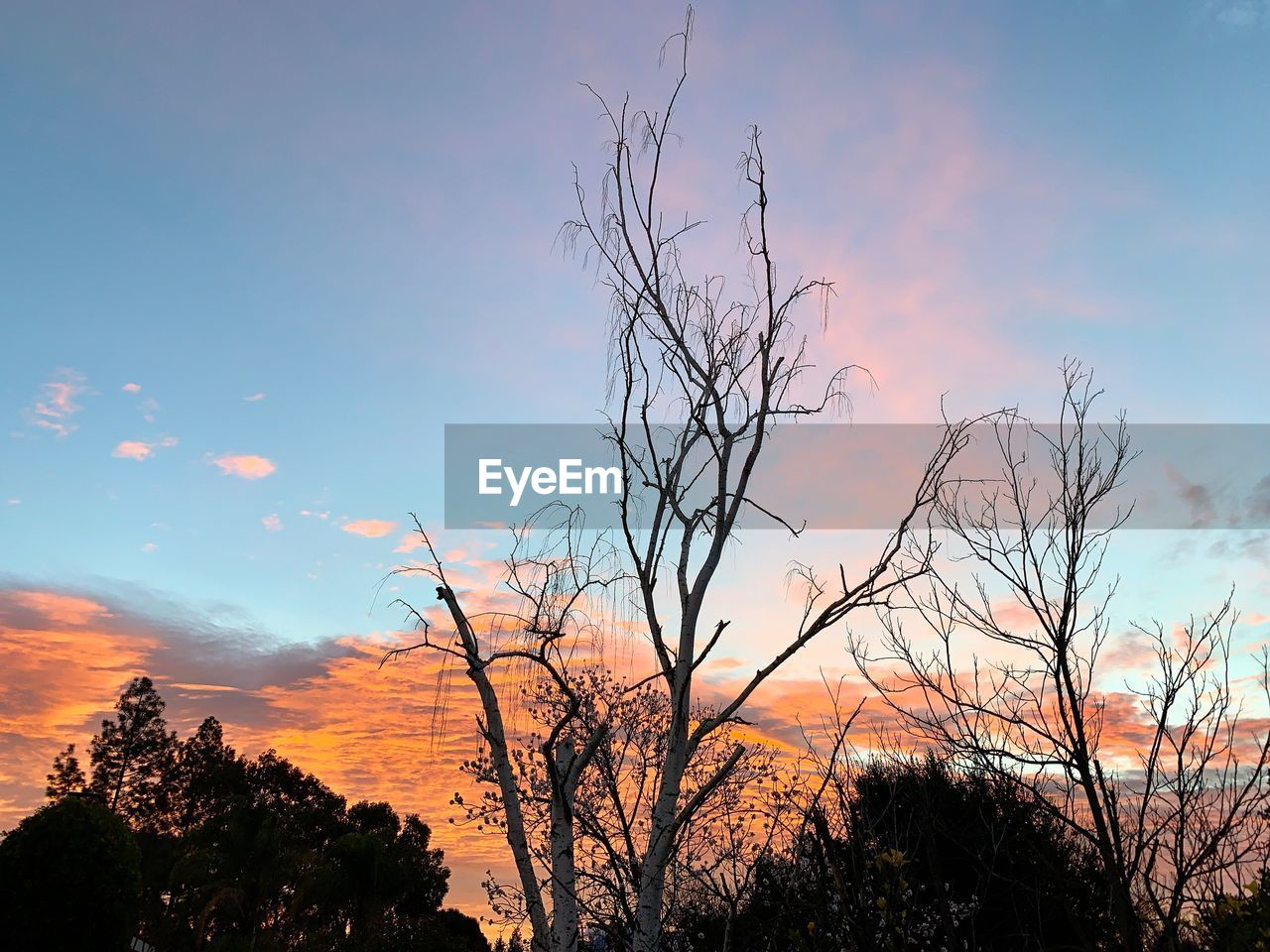 tree, sky, plant, sunset, beauty in nature, silhouette, scenics - nature, tranquility, tranquil scene, cloud - sky, bare tree, no people, branch, nature, non-urban scene, orange color, outdoors, low angle view, growth, environment
