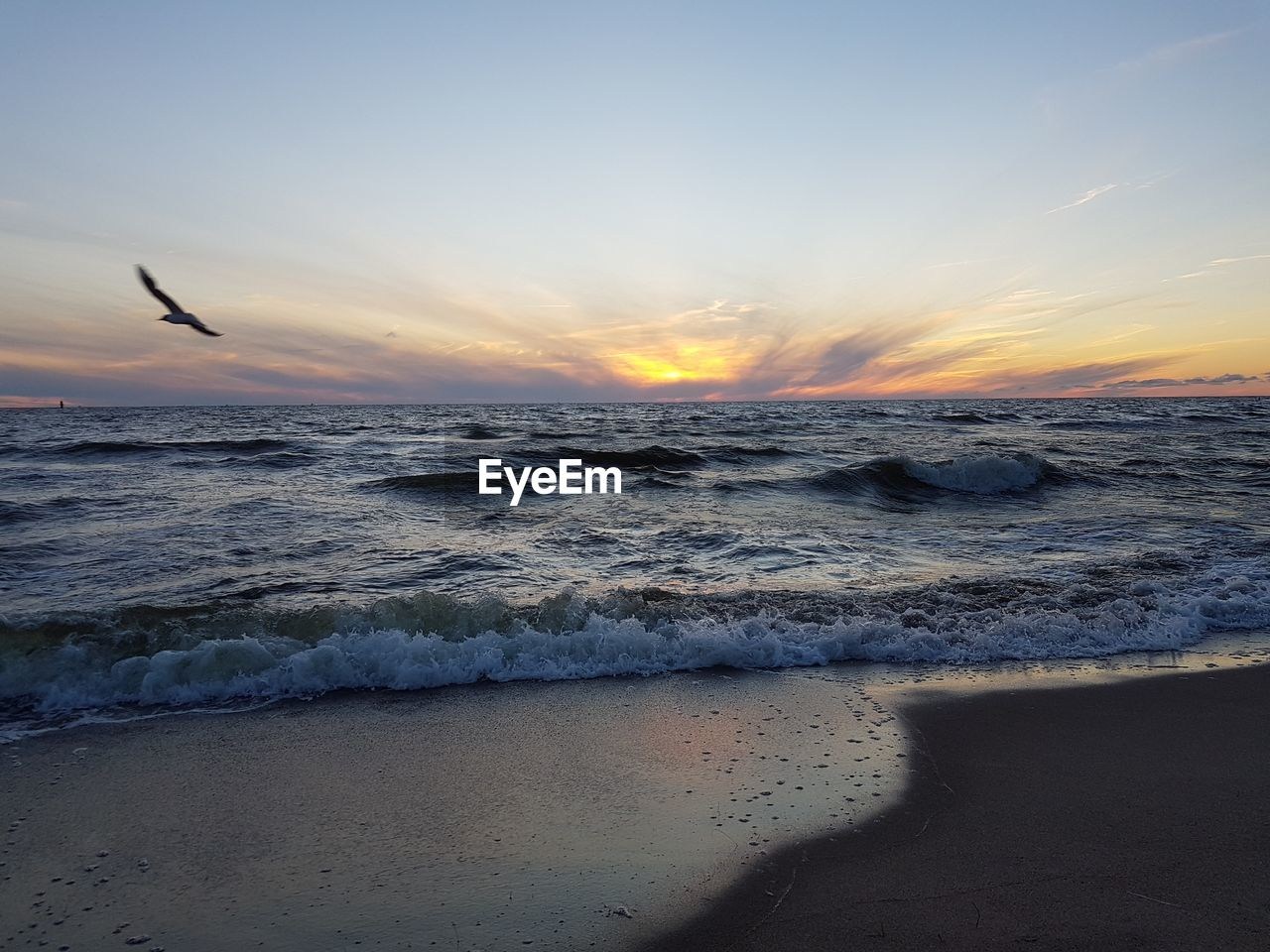 sea, sunset, beauty in nature, nature, scenics, water, beach, wave, horizon over water, sky, tranquility, tranquil scene, sand, no people, outdoors, motion, animal themes, day, bird