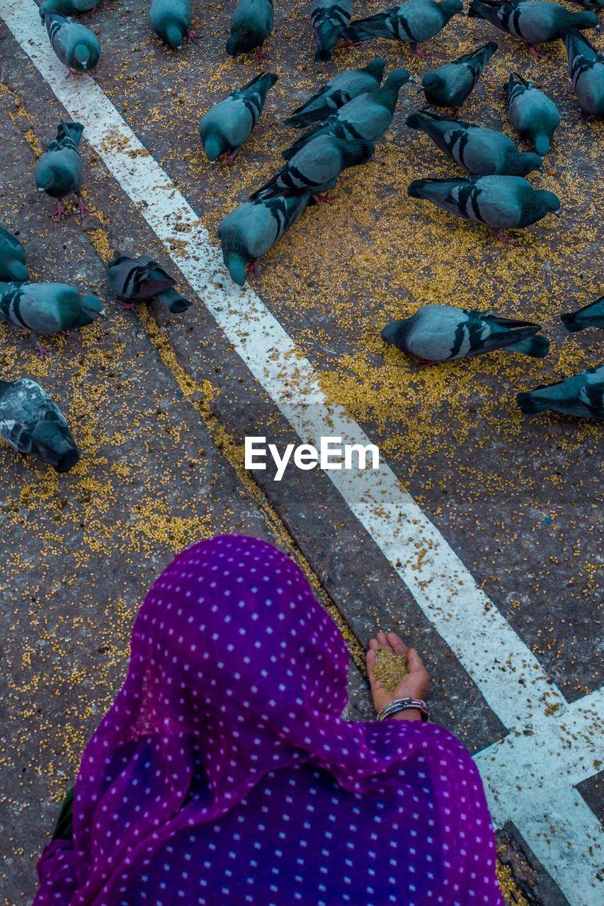 High angle view of woman feeding pigeons