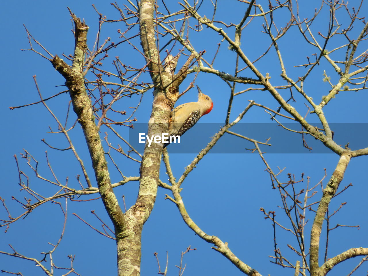 tree, branch, plant, low angle view, bare tree, sky, no people, day, nature, animal wildlife, blue, clear sky, animals in the wild, animal, bird, animal themes, vertebrate, one animal, sunlight, outdoors