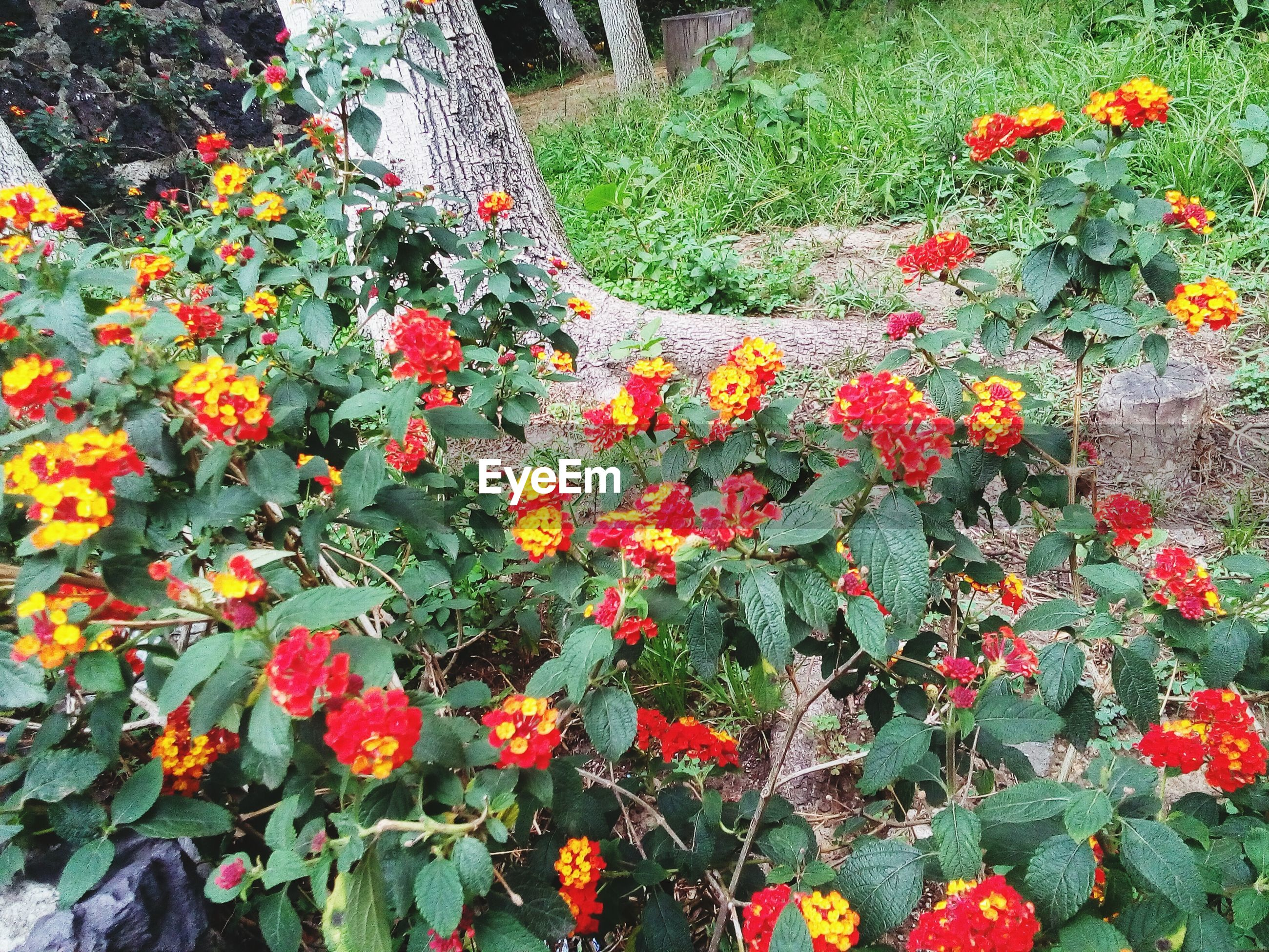 flower, growth, plant, freshness, beauty in nature, fragility, high angle view, nature, blooming, petal, orange color, red, leaf, green color, in bloom, field, day, outdoors, flower head, growing