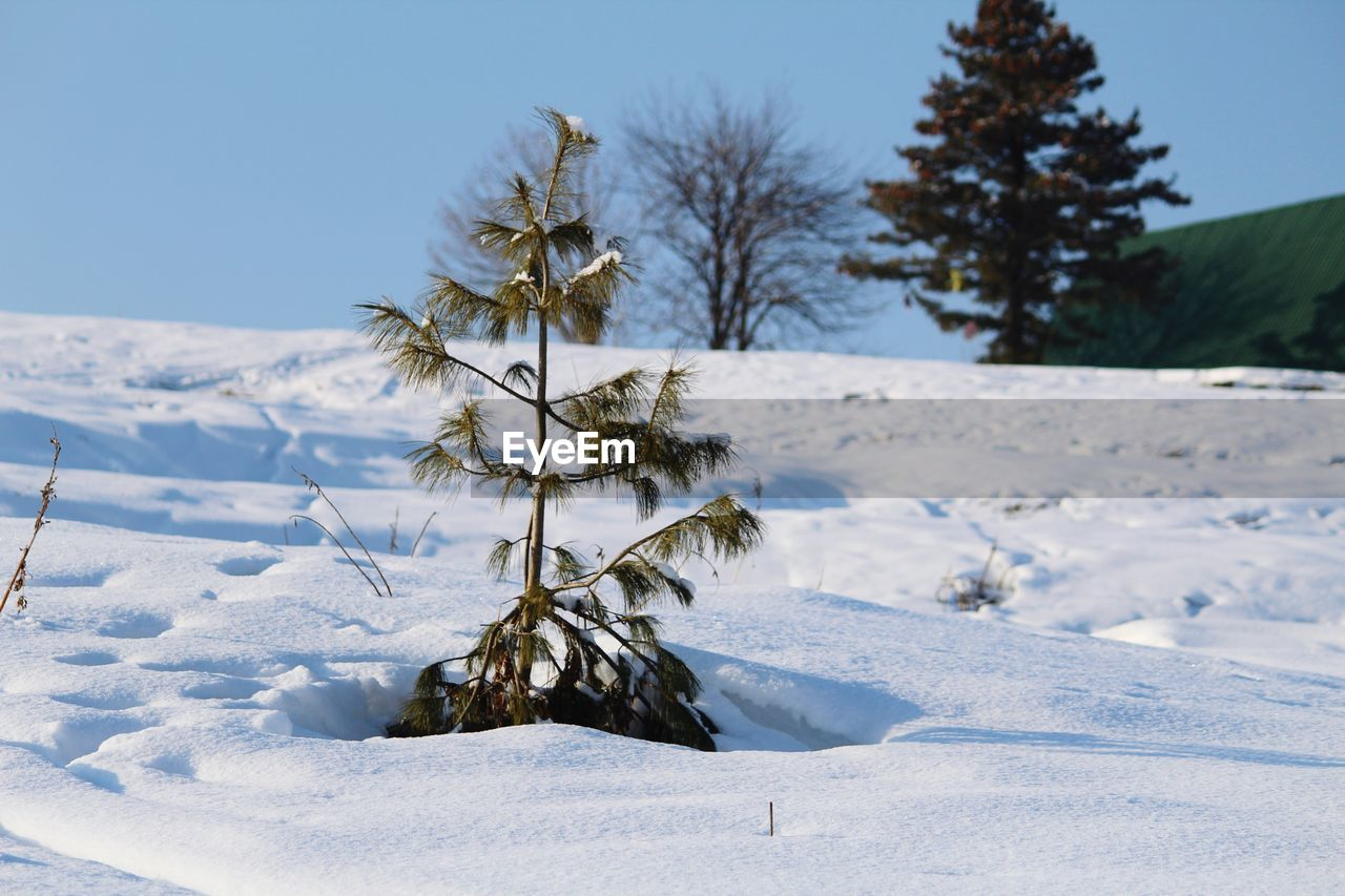 snow, winter, cold temperature, nature, tranquility, beauty in nature, weather, scenics, no people, white color, field, tranquil scene, outdoors, tree, day, landscape, clear sky, sky