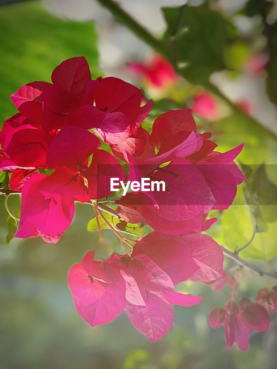 beauty in nature, flower, petal, pink color, nature, growth, fragility, plant, no people, focus on foreground, close-up, outdoors, day, freshness, flower head, blooming