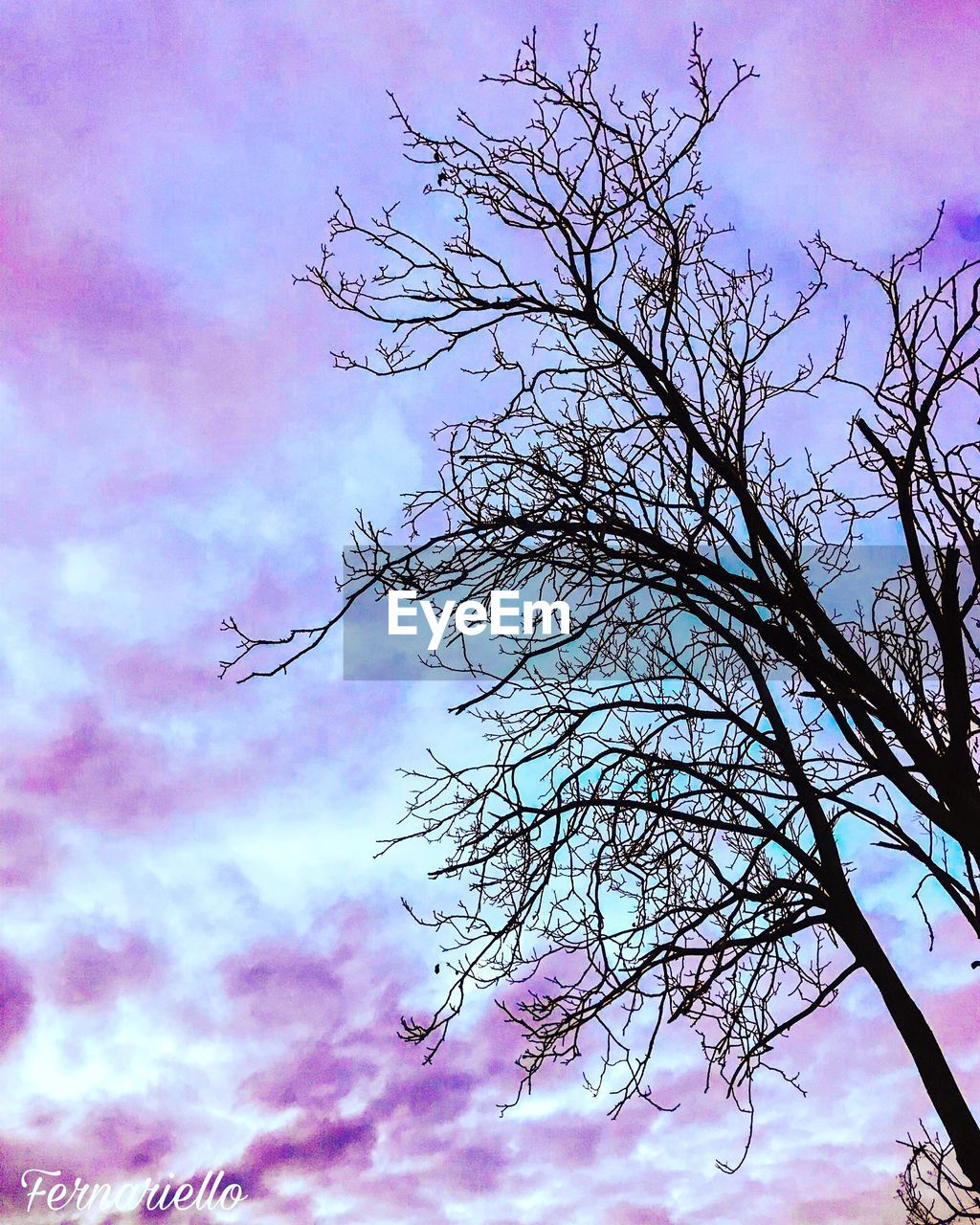 beauty in nature, nature, sky, tree, branch, low angle view, pink color, no people, outdoors, tranquility, growth, day, fragility, flower