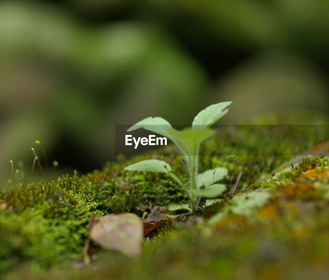 selective focus, growth, green color, leaf, plant part, plant, nature, close-up, beauty in nature, no people, day, seedling, beginnings, outdoors, land, field, vulnerability, new life, tranquility, fragility, small, surface level