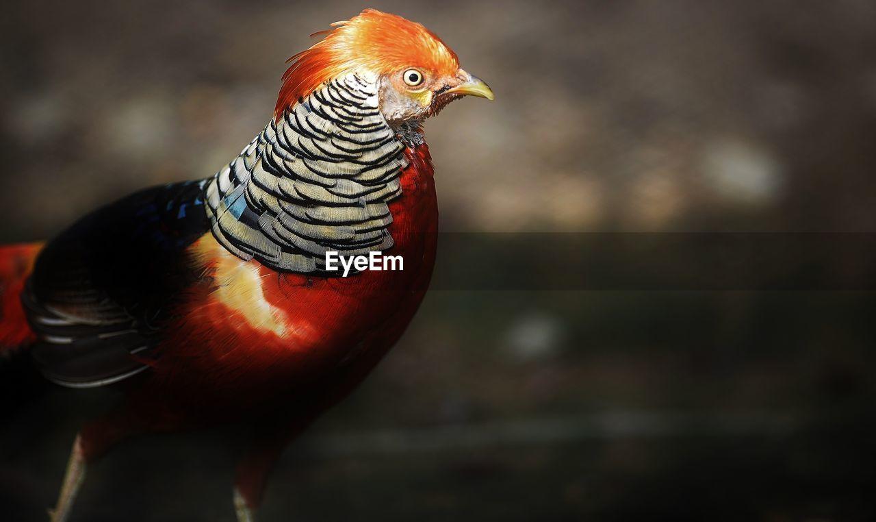 Close-Up Of An Exotic Bird