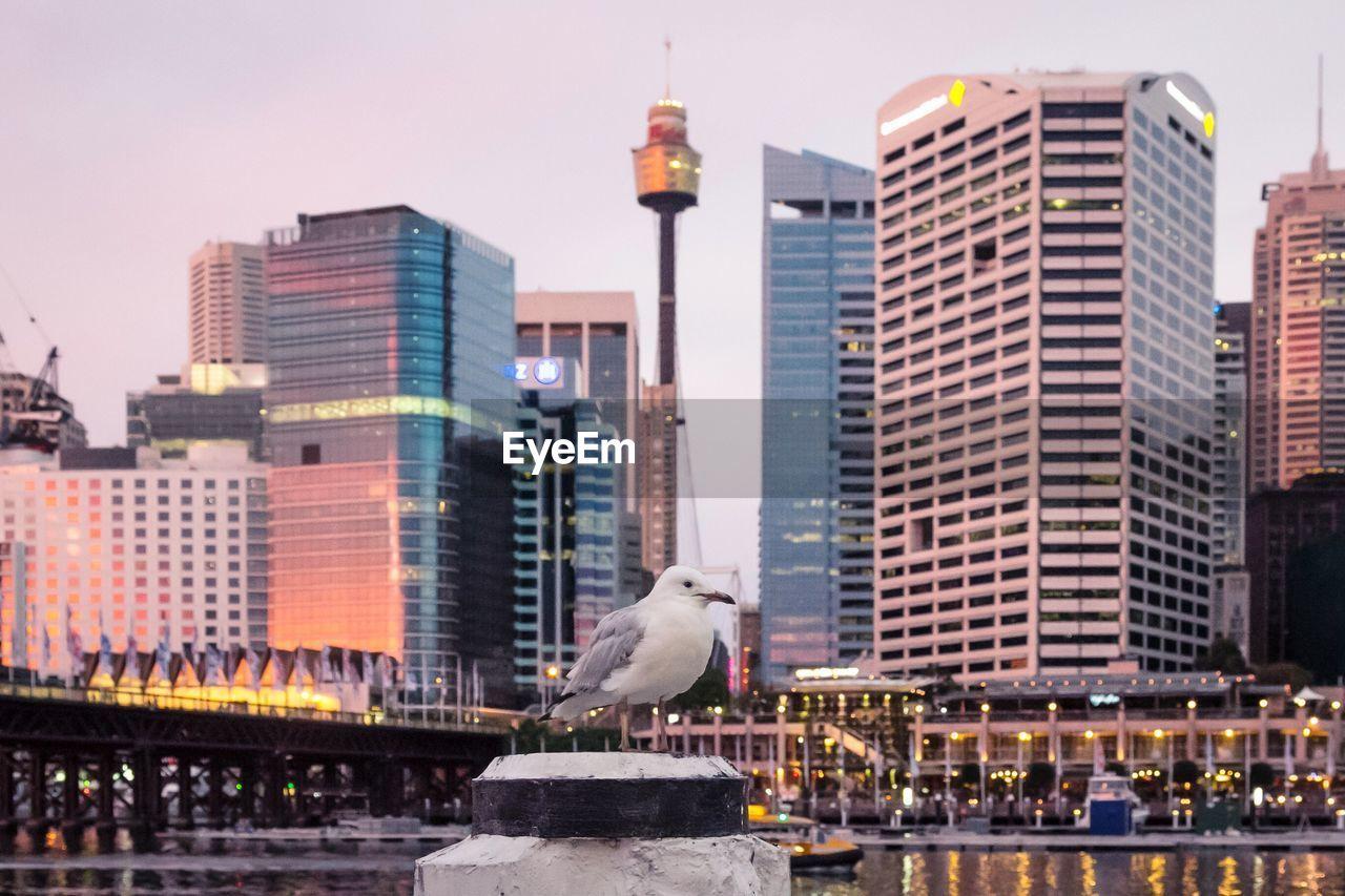 Seagull in bollard against buildings in city