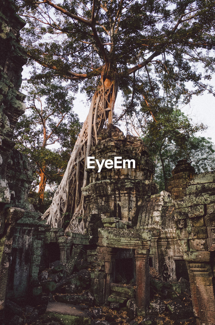 architecture, built structure, tree, religion, history, belief, place of worship, the past, plant, spirituality, ancient, day, nature, building, old ruin, no people, travel destinations, old, tourism, ancient civilization, outdoors, ruined, deterioration, archaeology