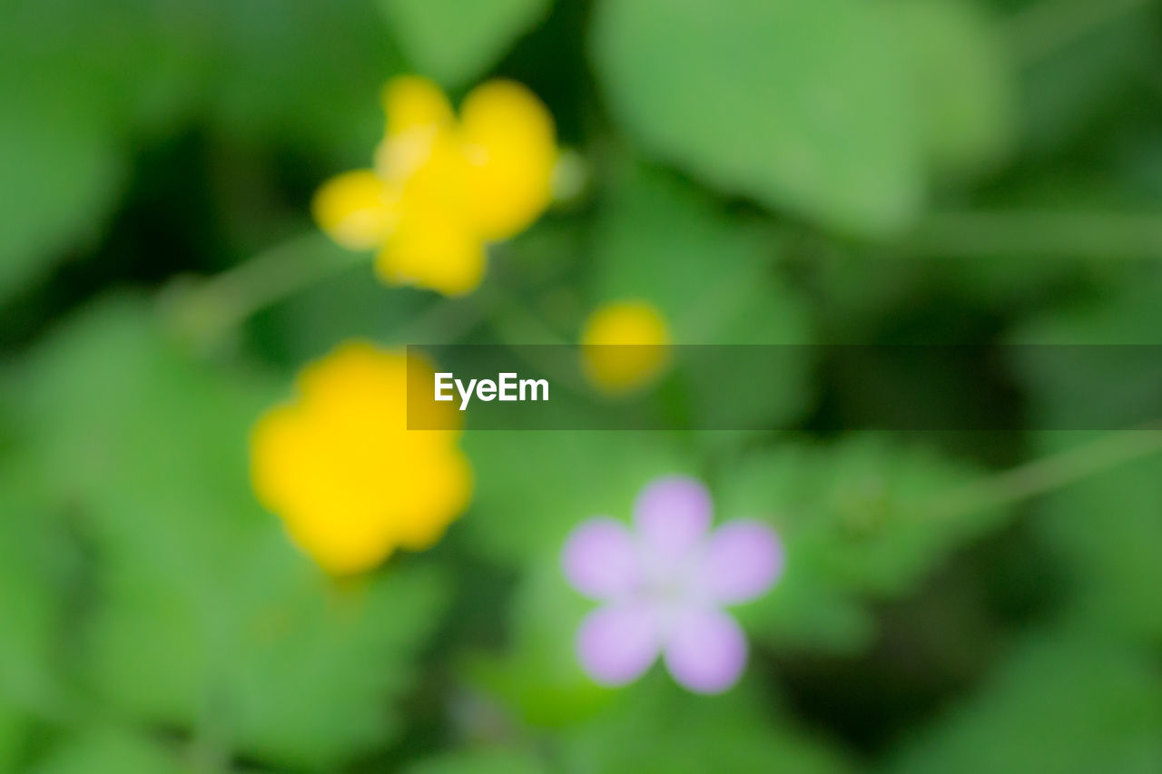 flower, freshness, growth, beauty in nature, nature, fragility, petal, yellow, plant, outdoors, green color, flower head, day, no people, blooming, close-up