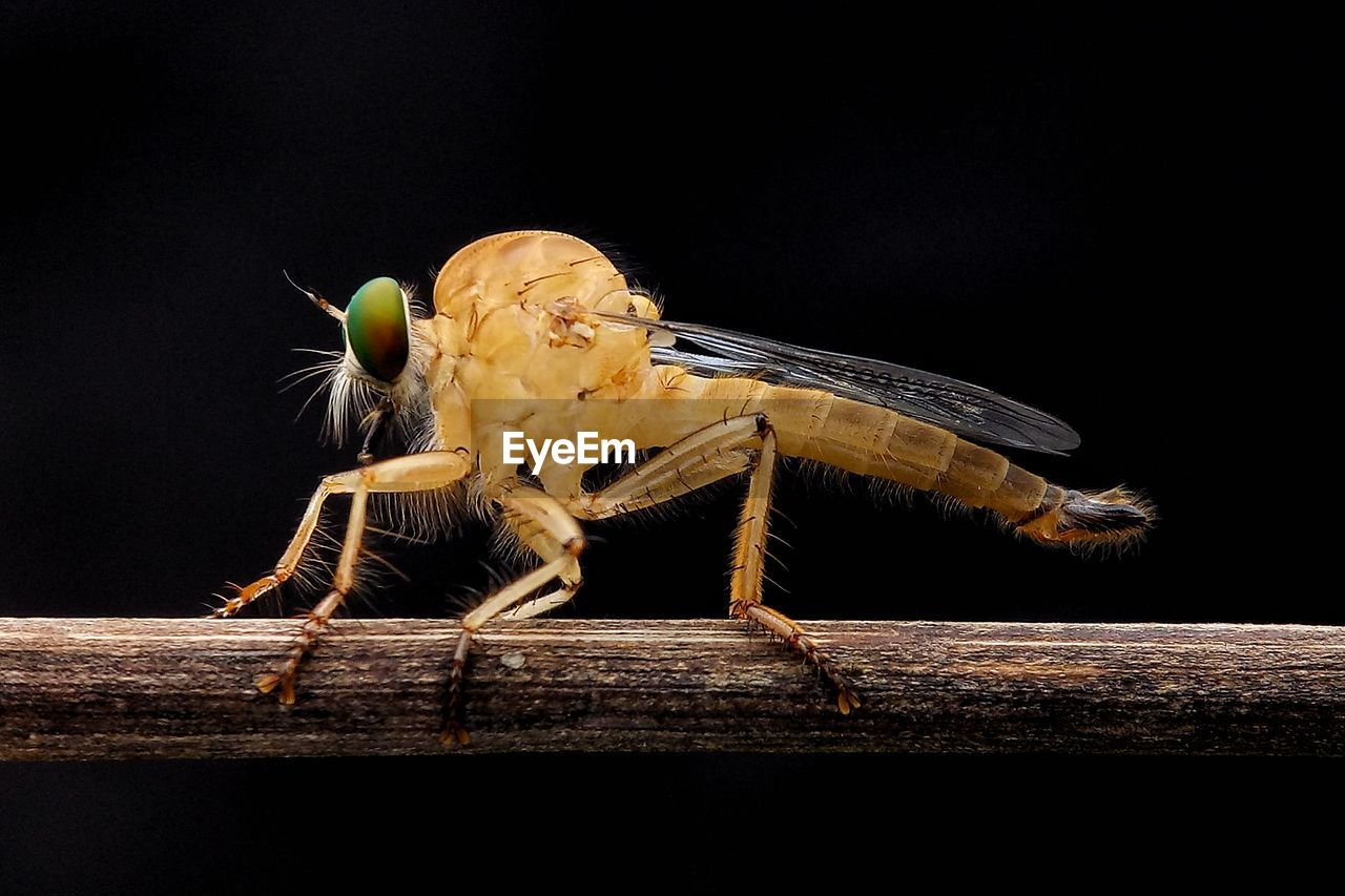 Close-Up Of Insect Perching On Wood Against Black Background