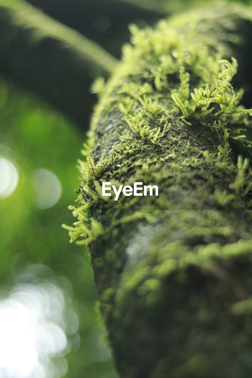 green color, close-up, no people, selective focus, growth, leaf, day, nature, outdoors, beauty in nature, freshness