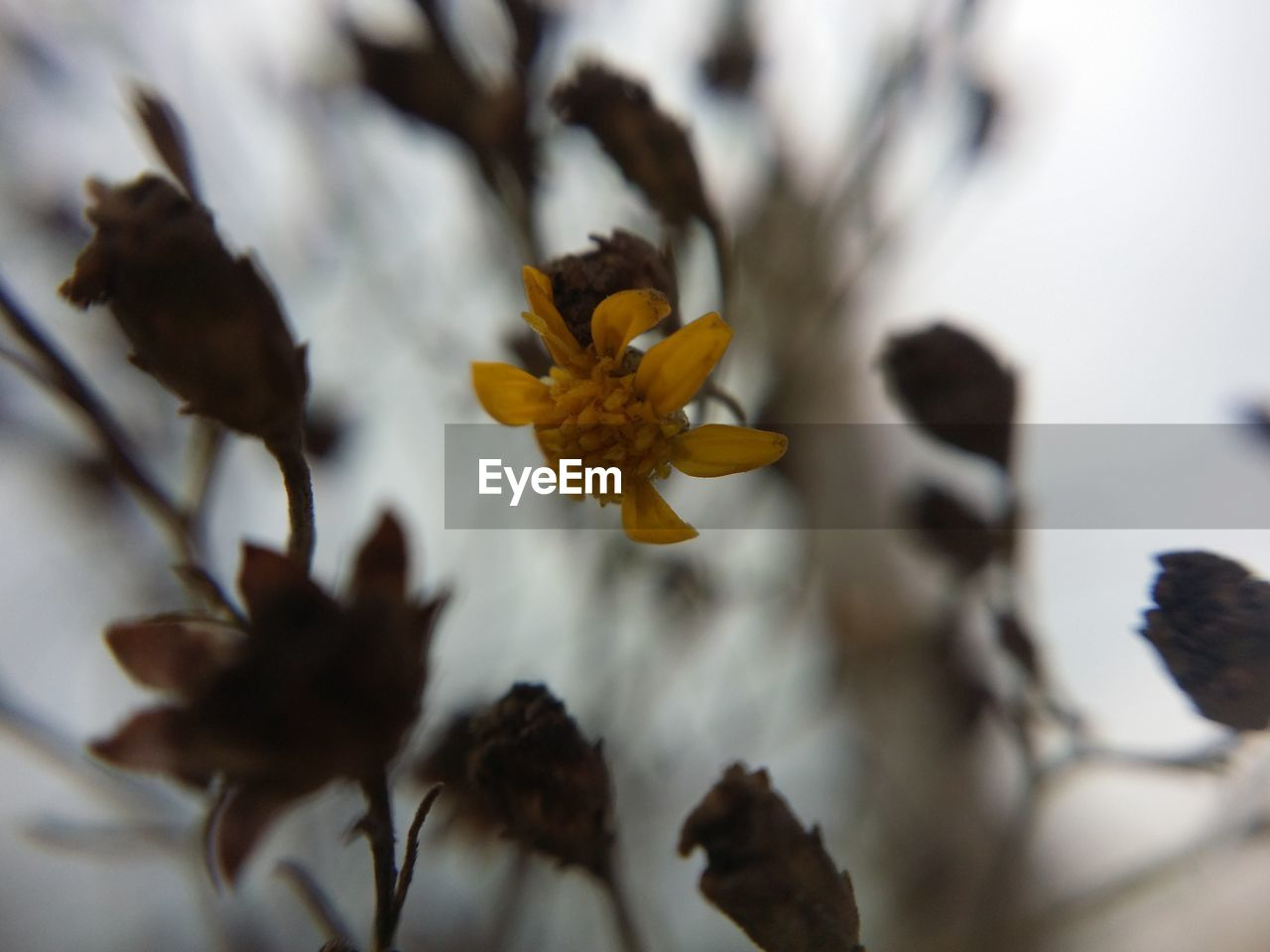 close-up, flower, no people, nature, plant, fragility, day, beauty in nature, outdoors, flower head, freshness