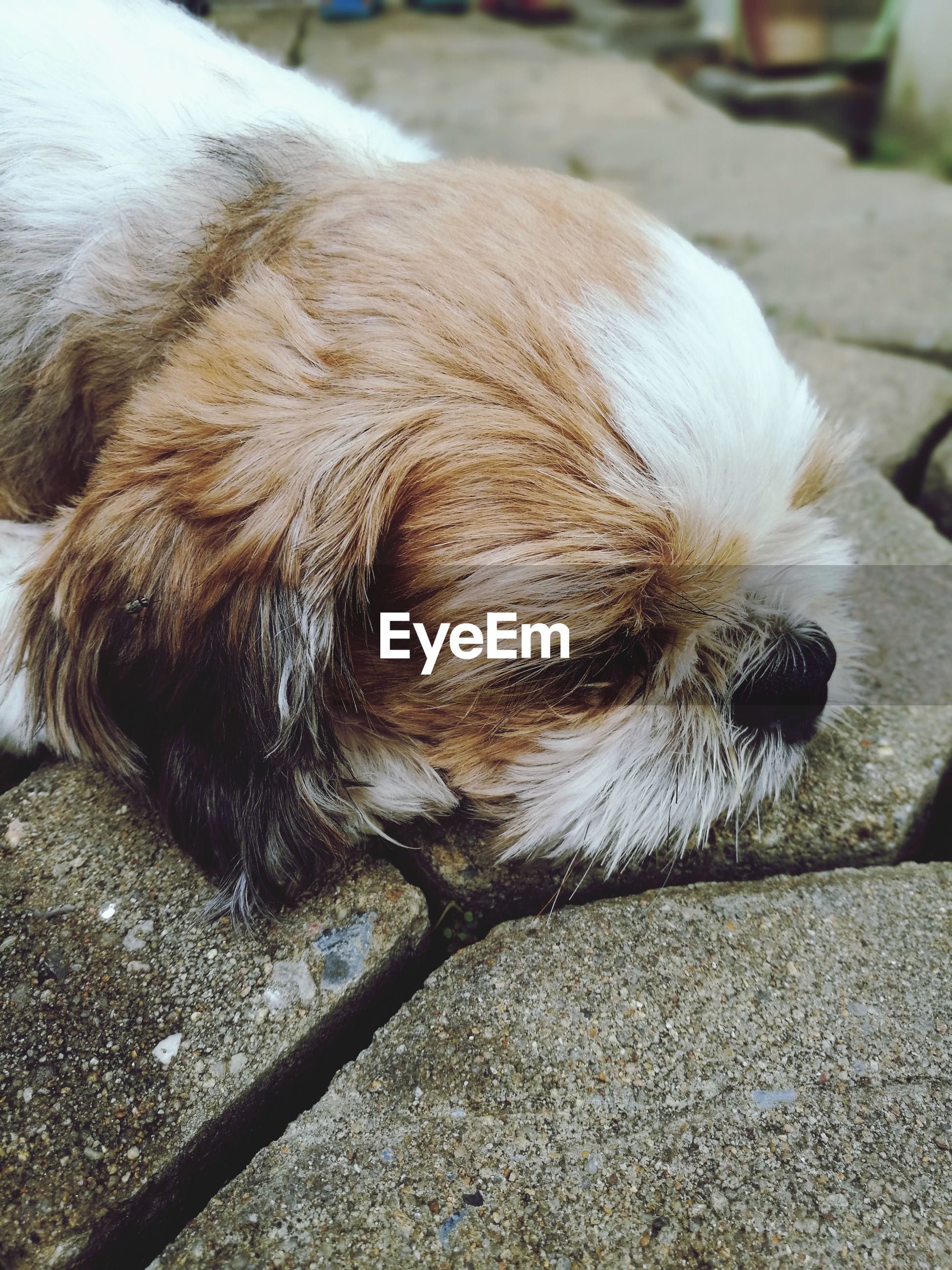 dog, one animal, pets, domestic animals, animal themes, mammal, animal hair, day, no people, outdoors, close-up