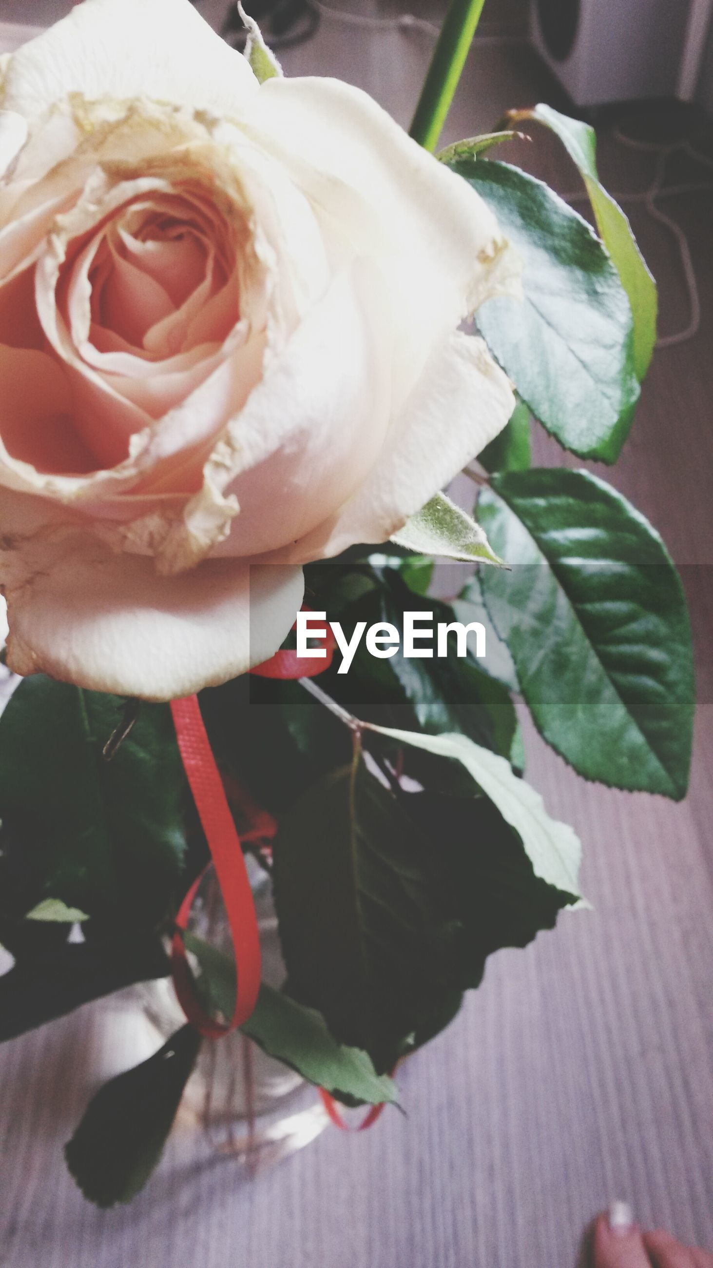 flower, petal, rose - flower, flower head, freshness, fragility, close-up, rose, beauty in nature, single flower, growth, indoors, leaf, nature, blooming, plant, vase, single rose, focus on foreground, no people