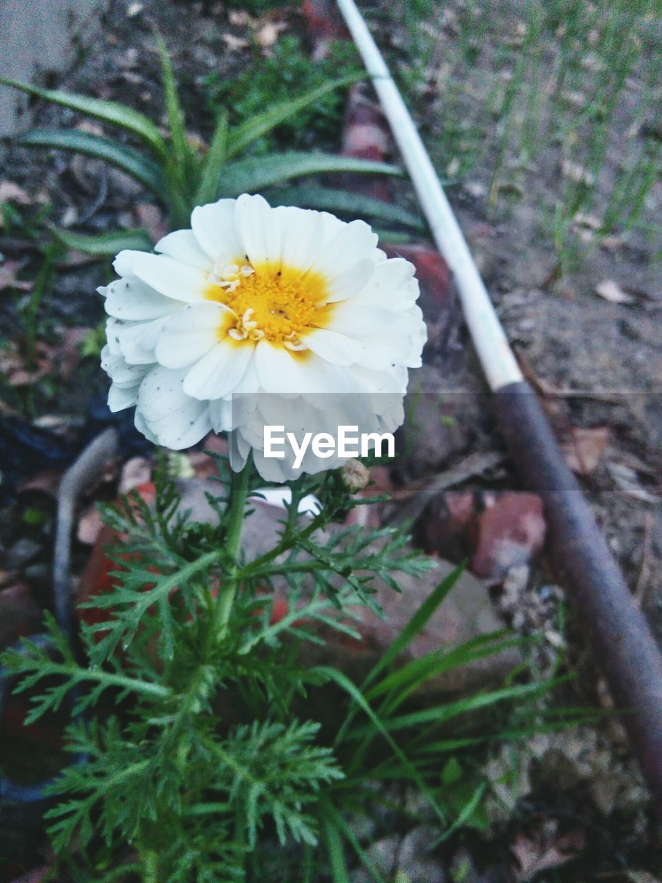 flower, fragility, petal, nature, freshness, beauty in nature, growth, flower head, outdoors, close-up, day, focus on foreground, plant, no people, yellow, blooming