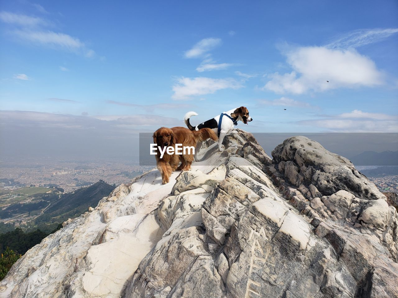 mammal, animal themes, sky, domestic animals, pets, animal, one animal, domestic, rock, vertebrate, solid, cloud - sky, rock - object, mountain, nature, dog, beauty in nature, canine, day, scenics - nature, no people, outdoors