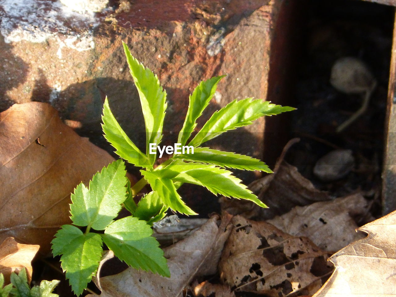 leaf, plant, growth, no people, nature, day, sunlight, outdoors, close-up, beauty in nature, freshness