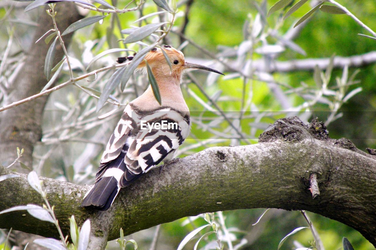 animals in the wild, branch, animal wildlife, tree, animal themes, one animal, bird, focus on foreground, day, no people, nature, perching, outdoors, mammal, close-up, hornbill
