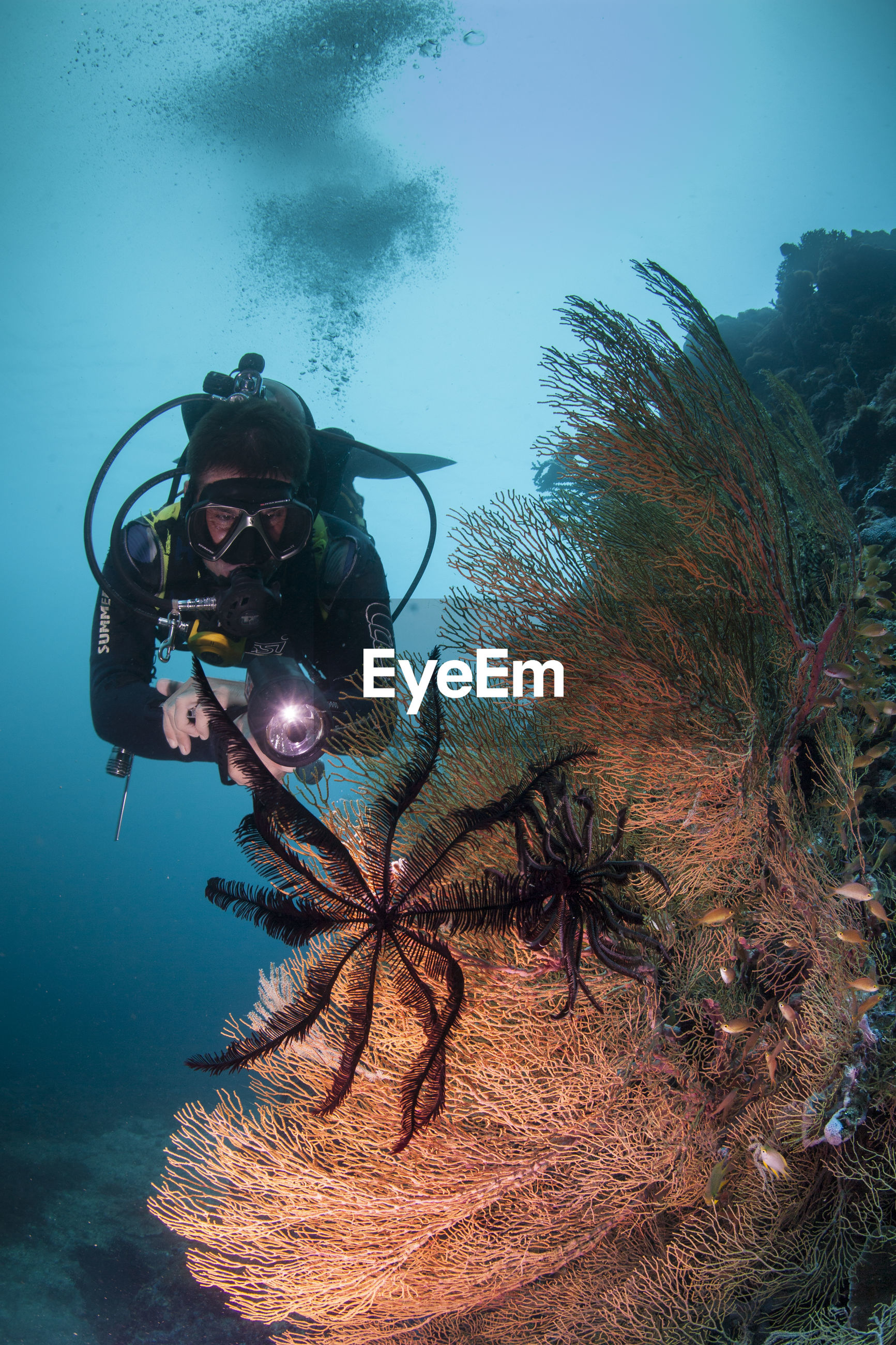 underwater, undersea, scuba diving, sea, exploration, aqualung - diving equipment, adventure, looking at camera, leisure activity, one person, water, sea life, swimming, coral, real people, nature, portrait, scuba diver, tree, day, outdoors, people