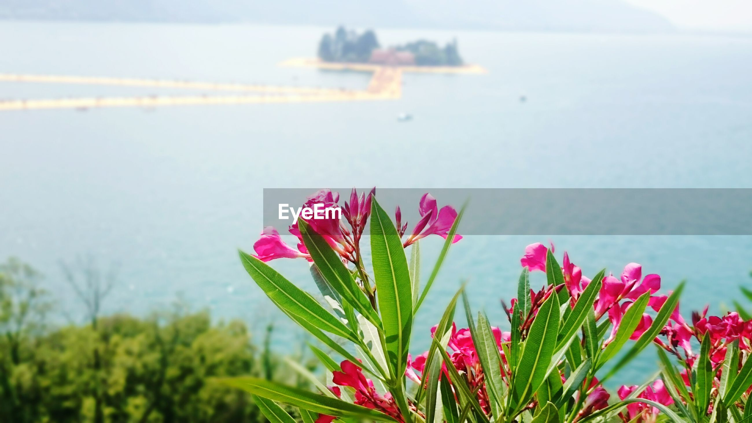 flower, growth, freshness, beauty in nature, fragility, petal, plant, pink color, nature, water, flower head, blooming, focus on foreground, sea, leaf, sky, stem, day, close-up, outdoors
