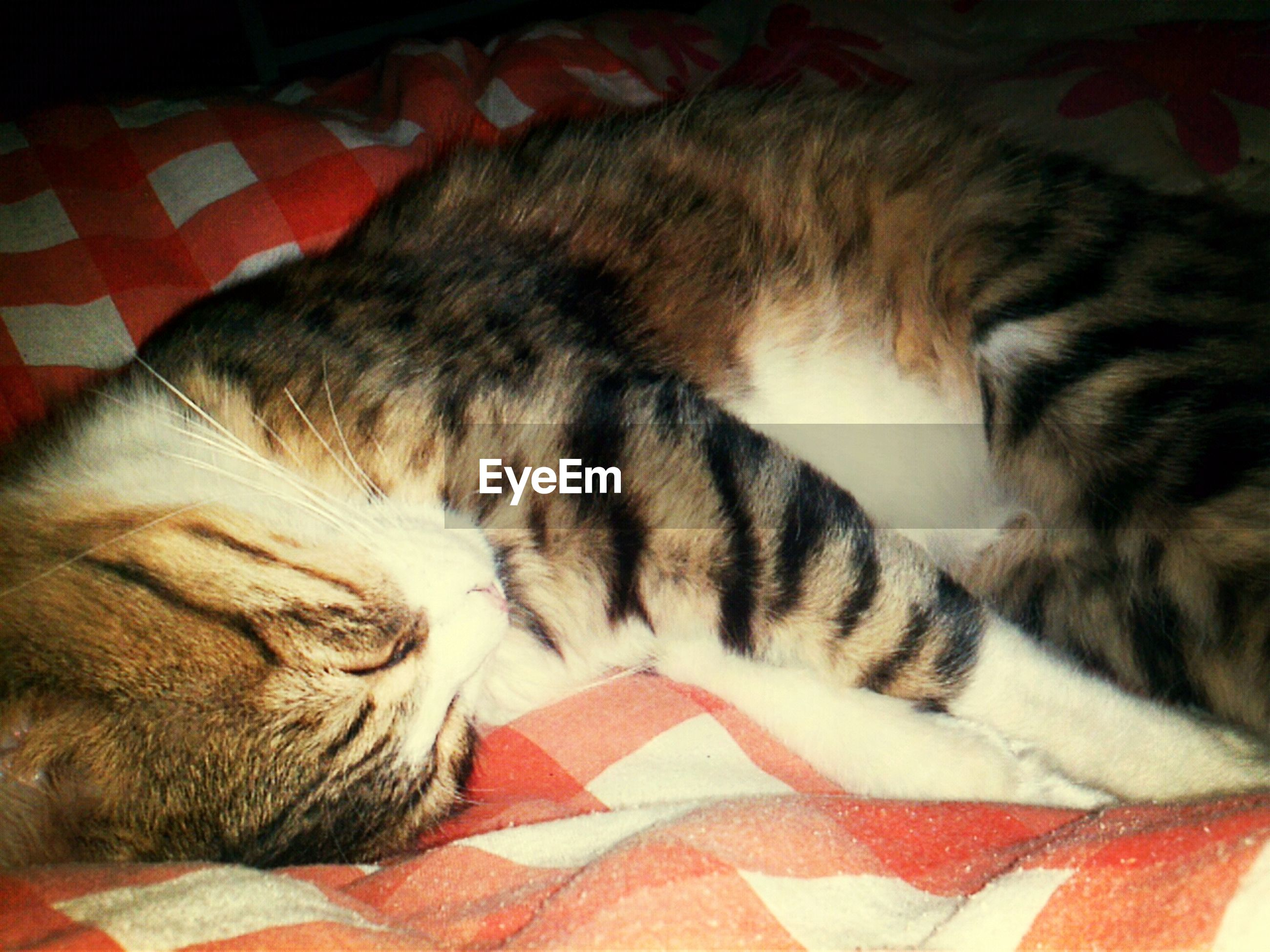 pets, domestic animals, domestic cat, cat, indoors, mammal, one animal, animal themes, relaxation, sleeping, feline, resting, lying down, bed, whisker, home interior, comfortable, eyes closed, sofa, high angle view