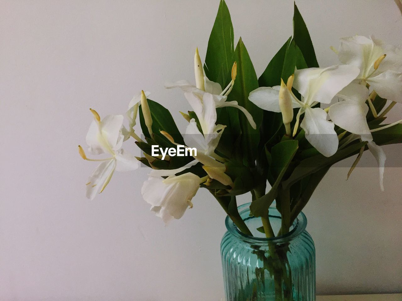 flower, vase, petal, fragility, beauty in nature, white color, freshness, no people, nature, leaf, flower head, indoors, green color, growth, close-up, plant, bouquet, day