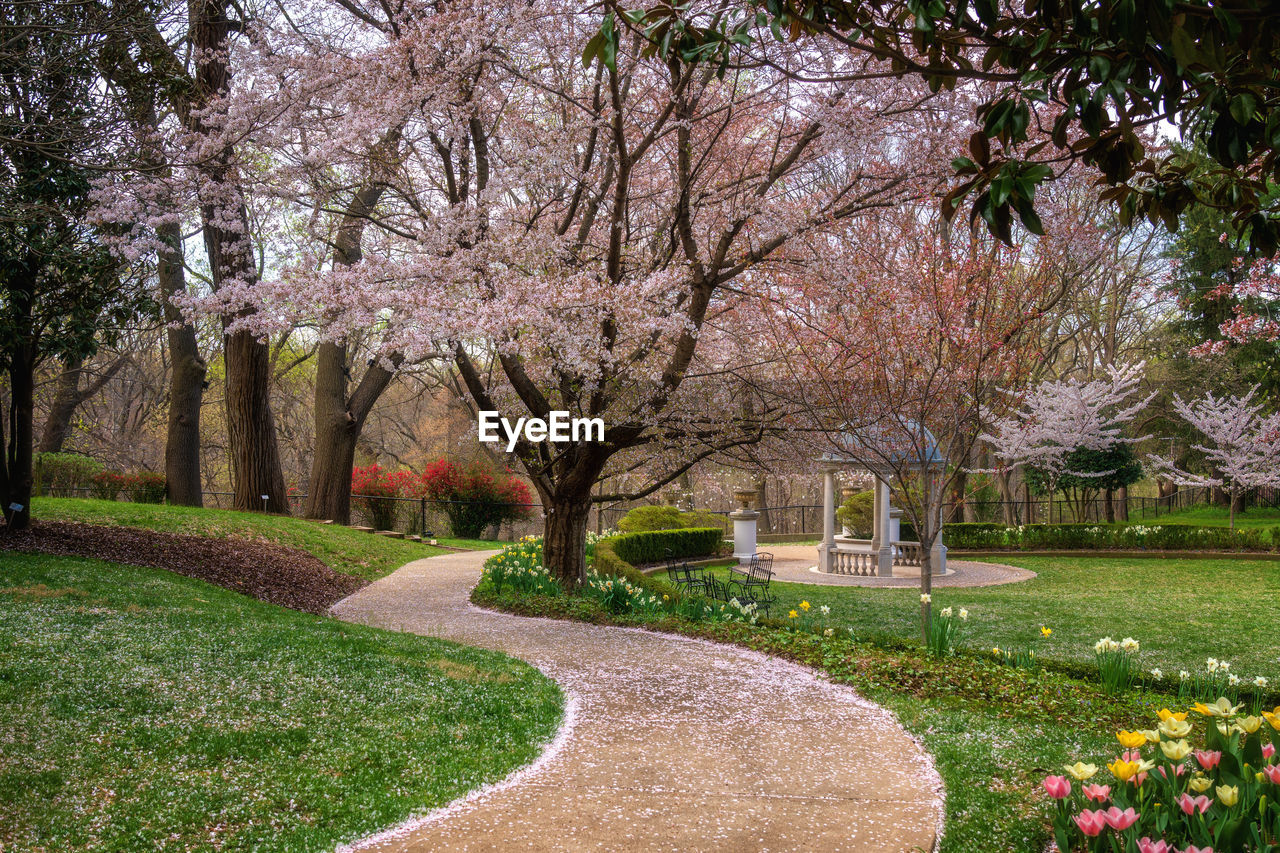 plant, tree, flower, flowering plant, nature, beauty in nature, growth, park, park - man made space, grass, no people, blossom, springtime, day, freshness, tranquility, outdoors, fragility, footpath, branch, cherry blossom, cherry tree, garden path