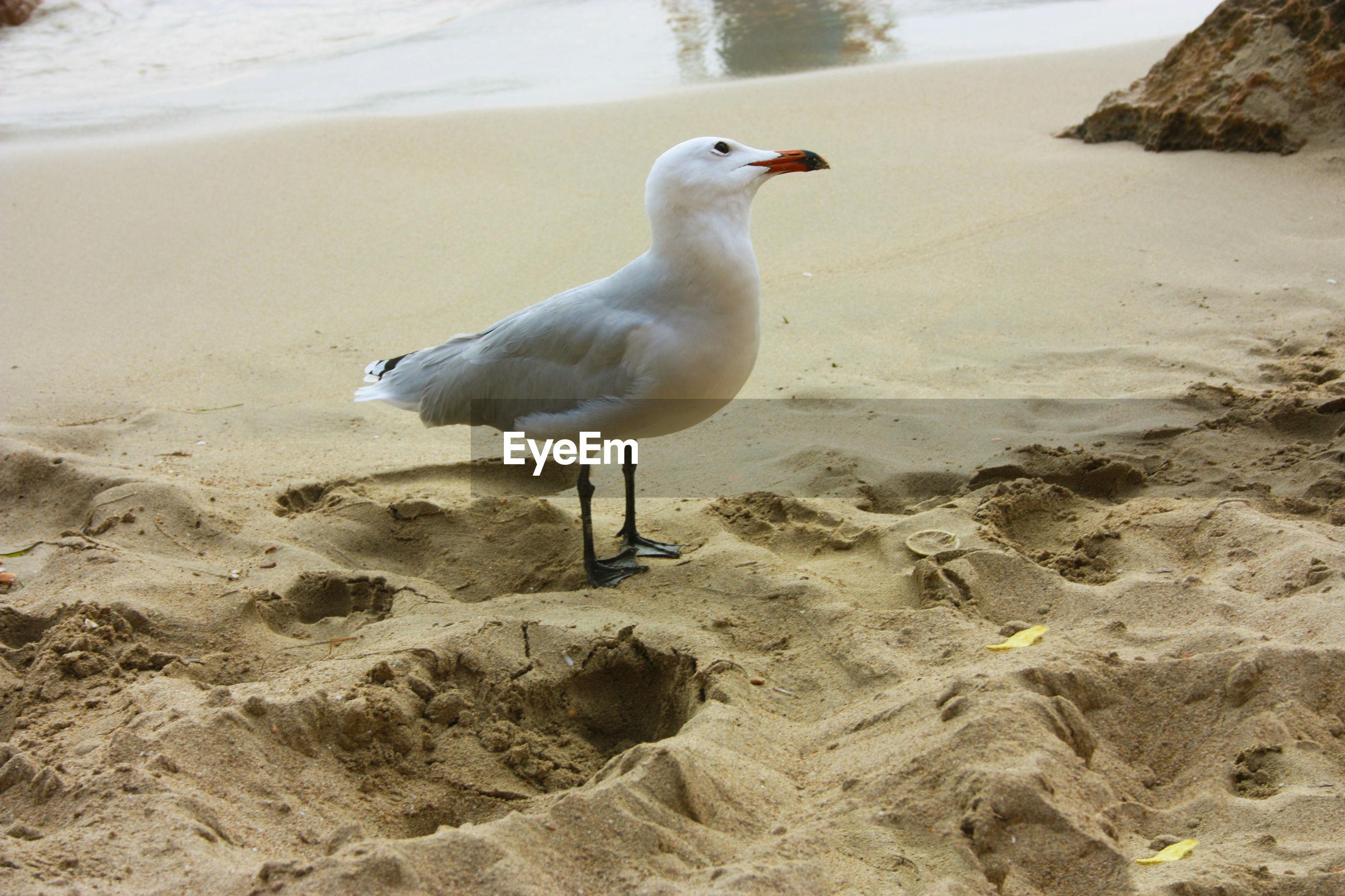 Seagull perching on a beach