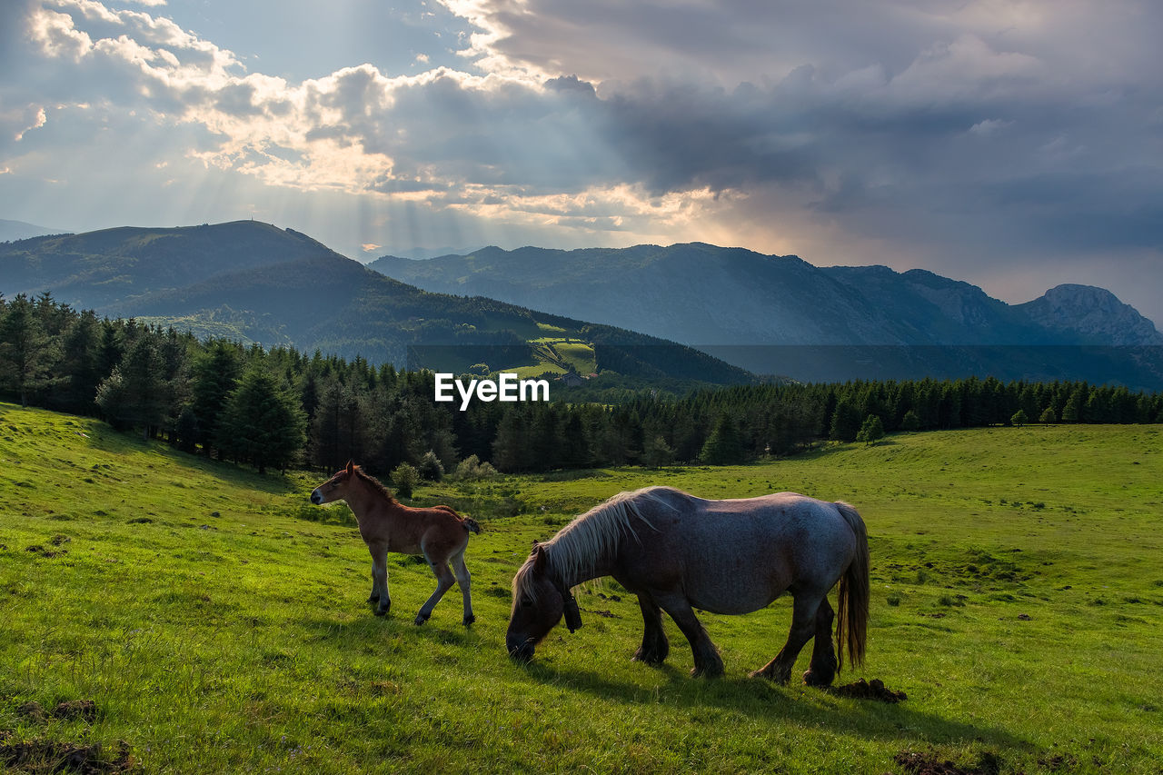 mammal, animal themes, animal, mountain, sky, cloud - sky, field, domestic animals, domestic, livestock, vertebrate, grass, pets, plant, beauty in nature, land, scenics - nature, group of animals, environment, landscape, mountain range, no people, herbivorous, outdoors