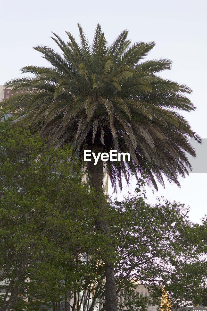 Date Palm Tree Against Sky