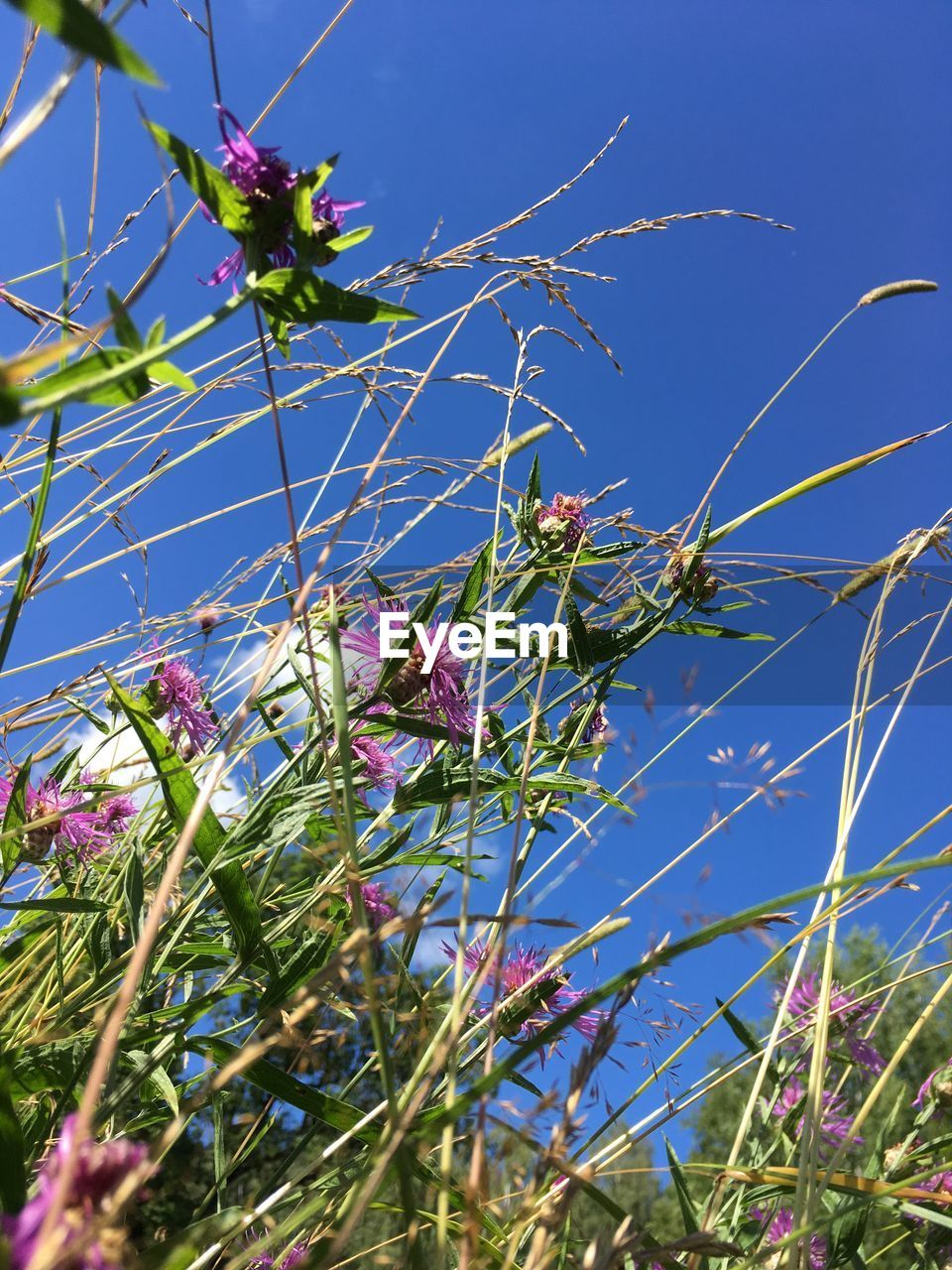 flower, growth, beauty in nature, low angle view, fragility, nature, blue, day, no people, plant, freshness, branch, tree, outdoors, petal, blossom, sky, clear sky, sunlight, green color, blooming, close-up, flower head
