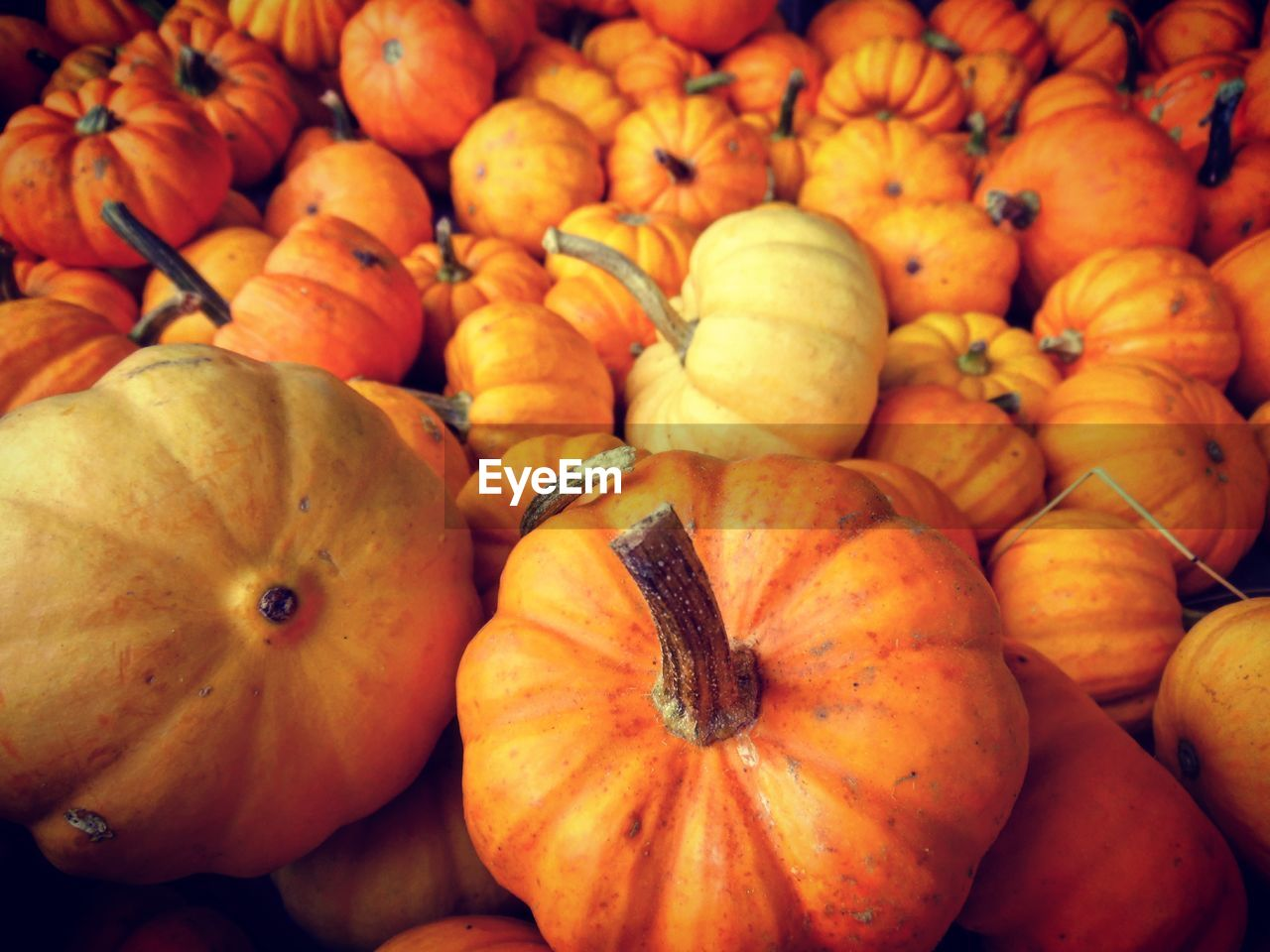 pumpkin, food and drink, healthy eating, food, freshness, abundance, for sale, orange color, vegetable, retail, fruit, market, no people, full frame, backgrounds, close-up, large group of objects, halloween, squash - vegetable, day, gourd, outdoors