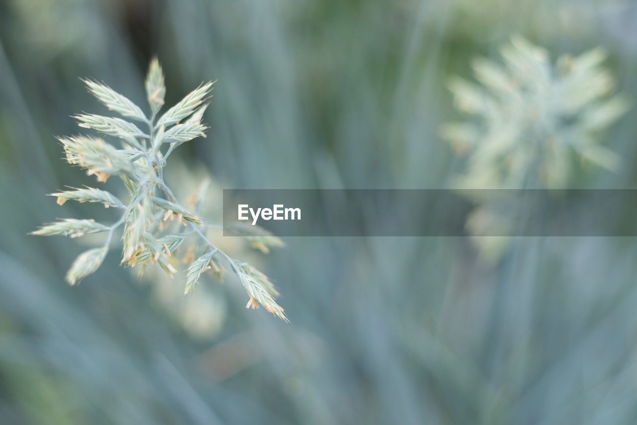 growth, plant, beauty in nature, nature, no people, close-up, day, tranquility, focus on foreground, plant part, green color, leaf, selective focus, outdoors, field, fragility, vulnerability, land, sunlight, environment