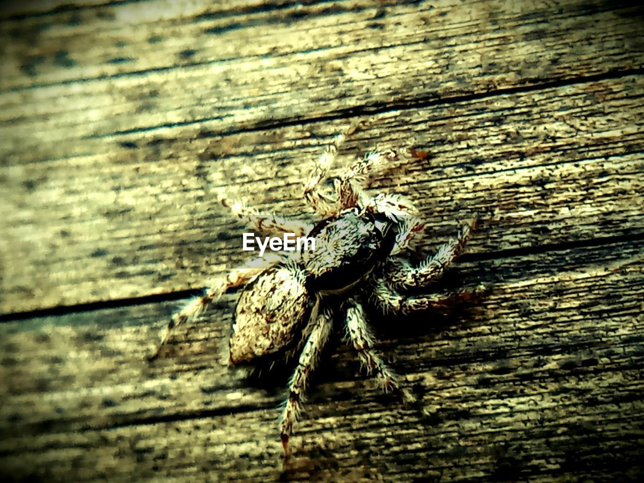 wood - material, animals in the wild, animal wildlife, animal, animal themes, invertebrate, one animal, insect, close-up, no people, arachnid, arthropod, textured, day, spider, zoology, plank, selective focus, outdoors, nature