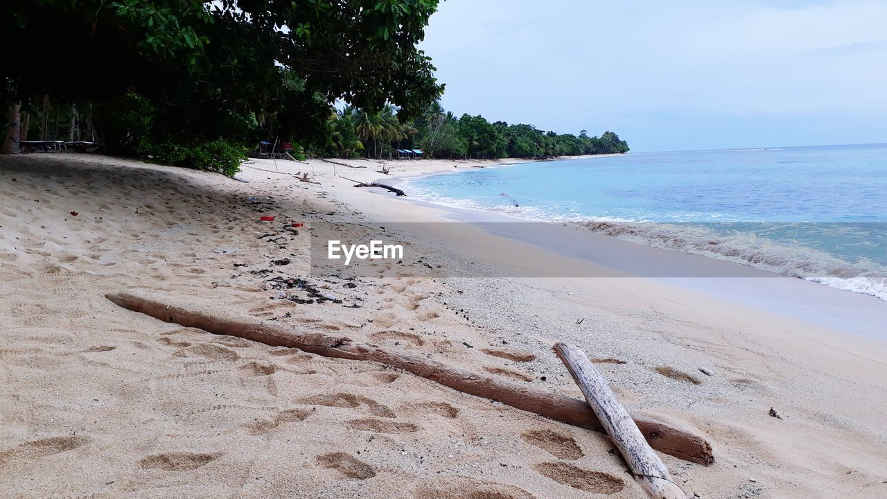 beach, land, sea, sand, water, sky, tree, nature, beauty in nature, scenics - nature, tranquil scene, tranquility, plant, day, no people, horizon over water, outdoors, horizon, idyllic, driftwood