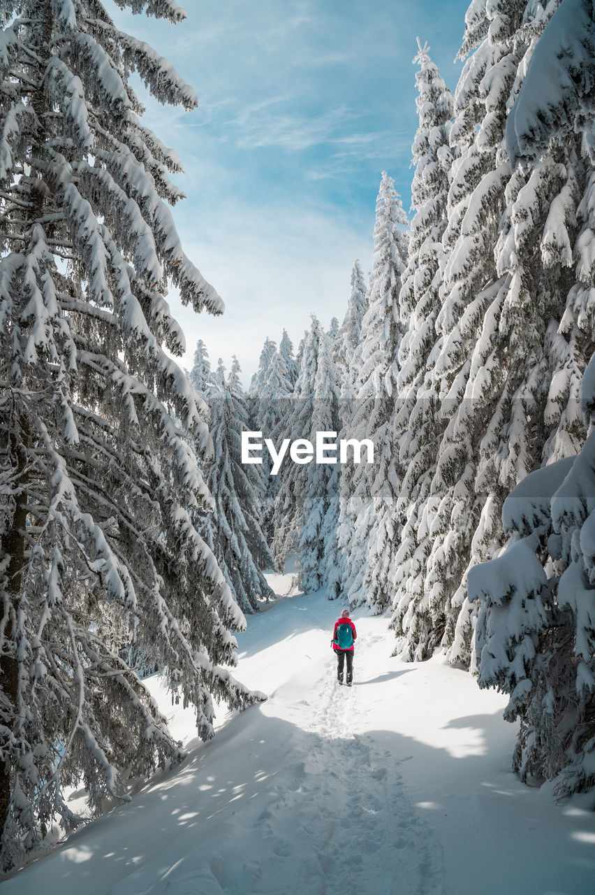 Rear view of woman hiking in snow covered forest