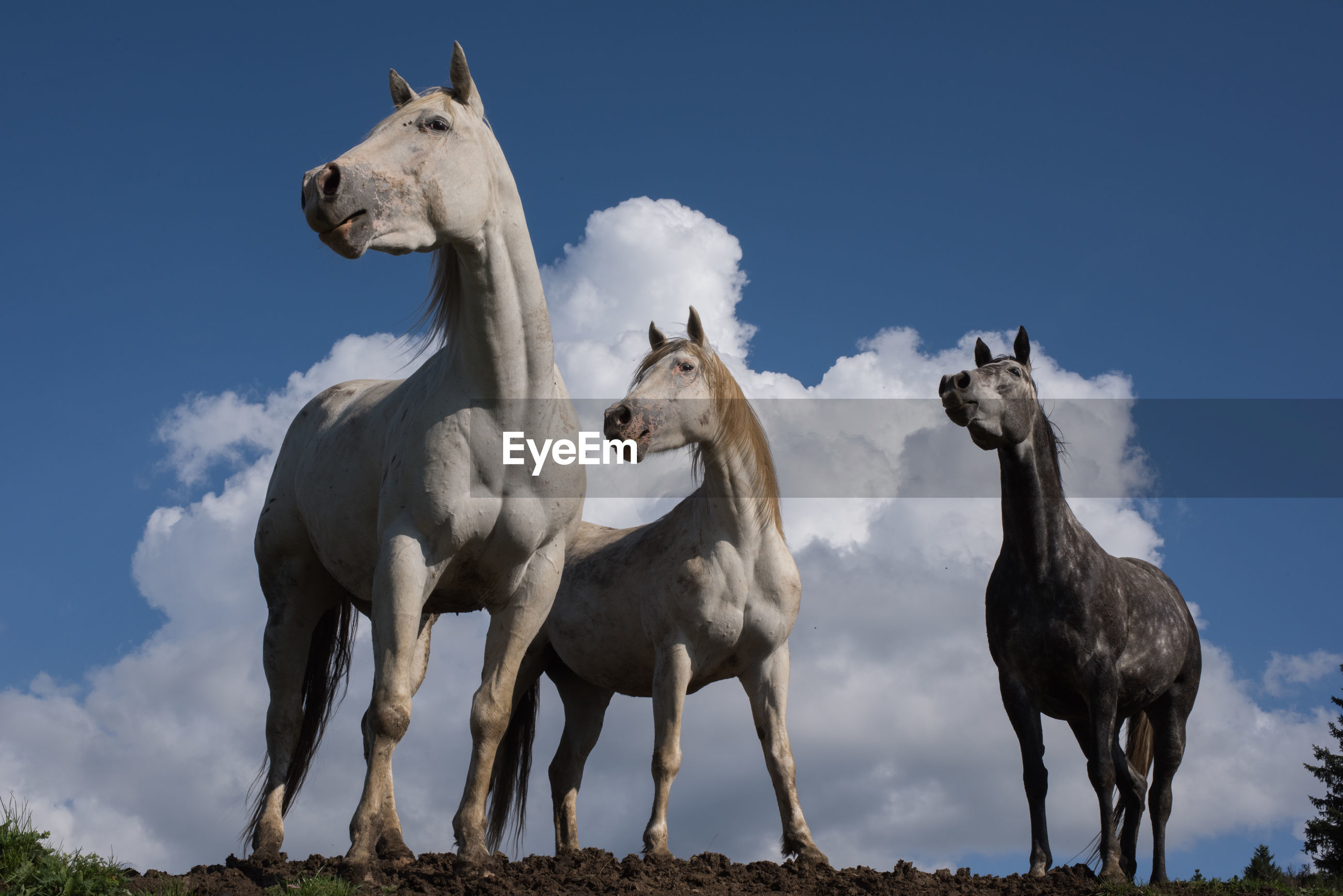 Low angle view of horses against sky