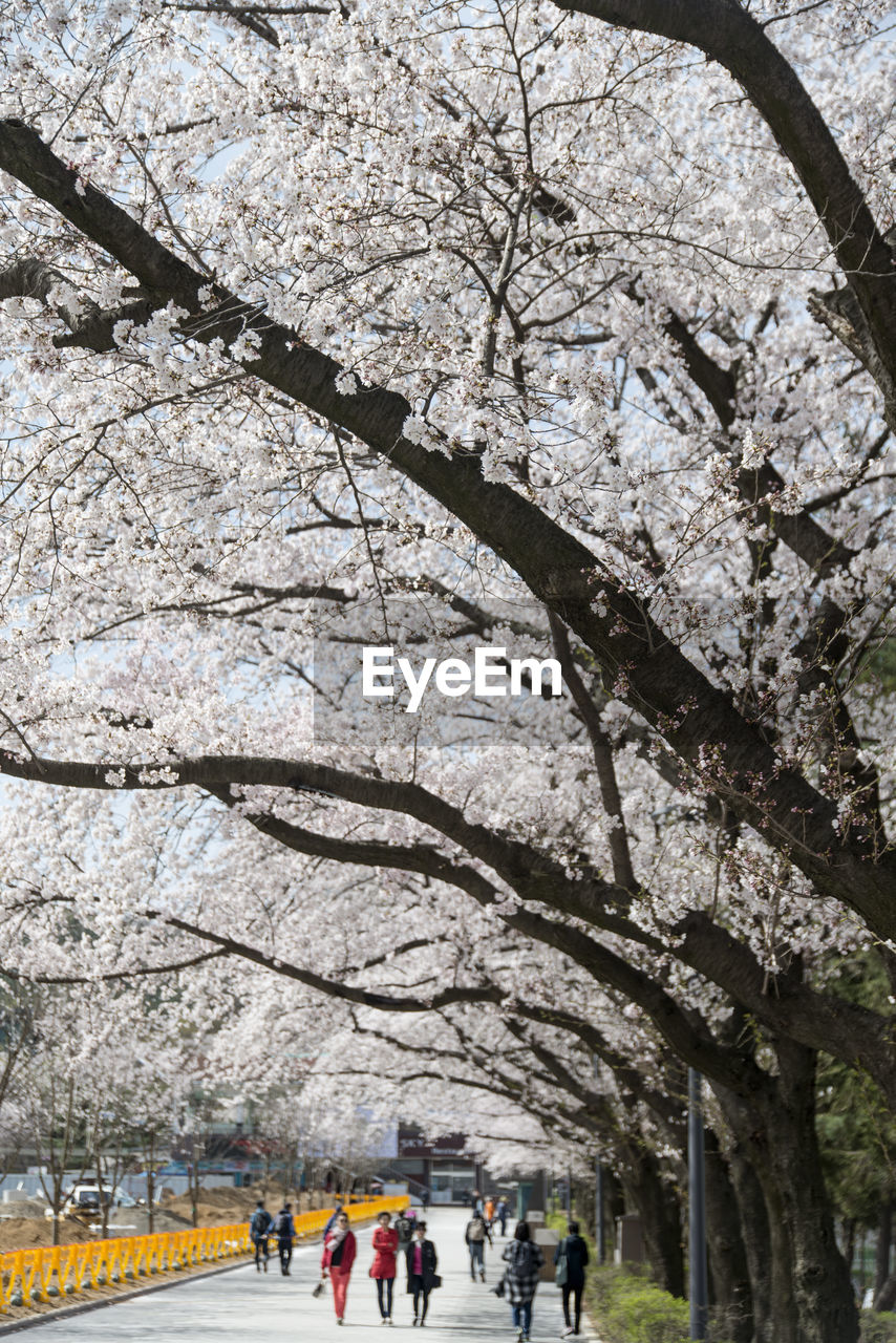tree, branch, real people, springtime, men, large group of people, day, low angle view, women, flower, outdoors, beauty in nature, architecture, nature, adult, people, sky, adults only