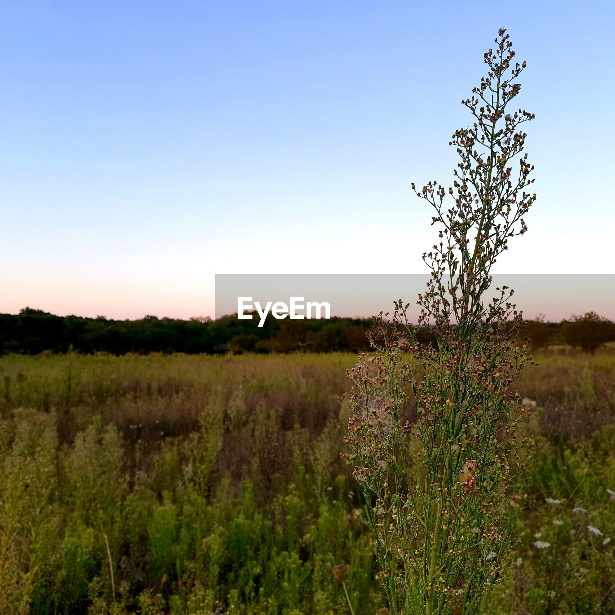 PLANTS GROWING ON LAND AGAINST SKY