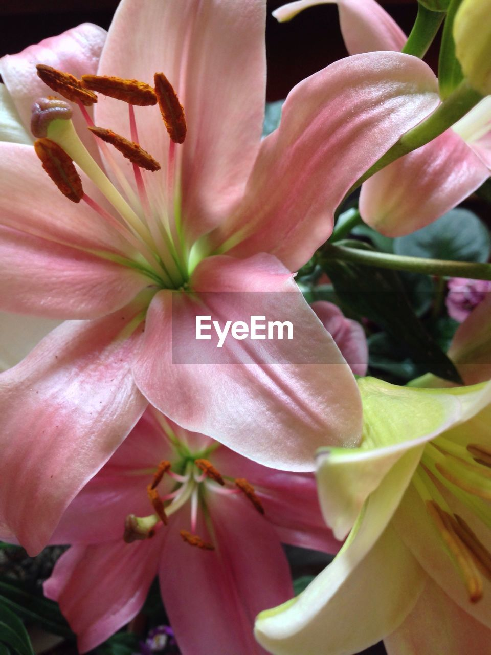 flower, petal, beauty in nature, fragility, growth, flower head, nature, plant, freshness, blossom, no people, blooming, stamen, close-up, pink color, springtime, outdoors, day lily, day