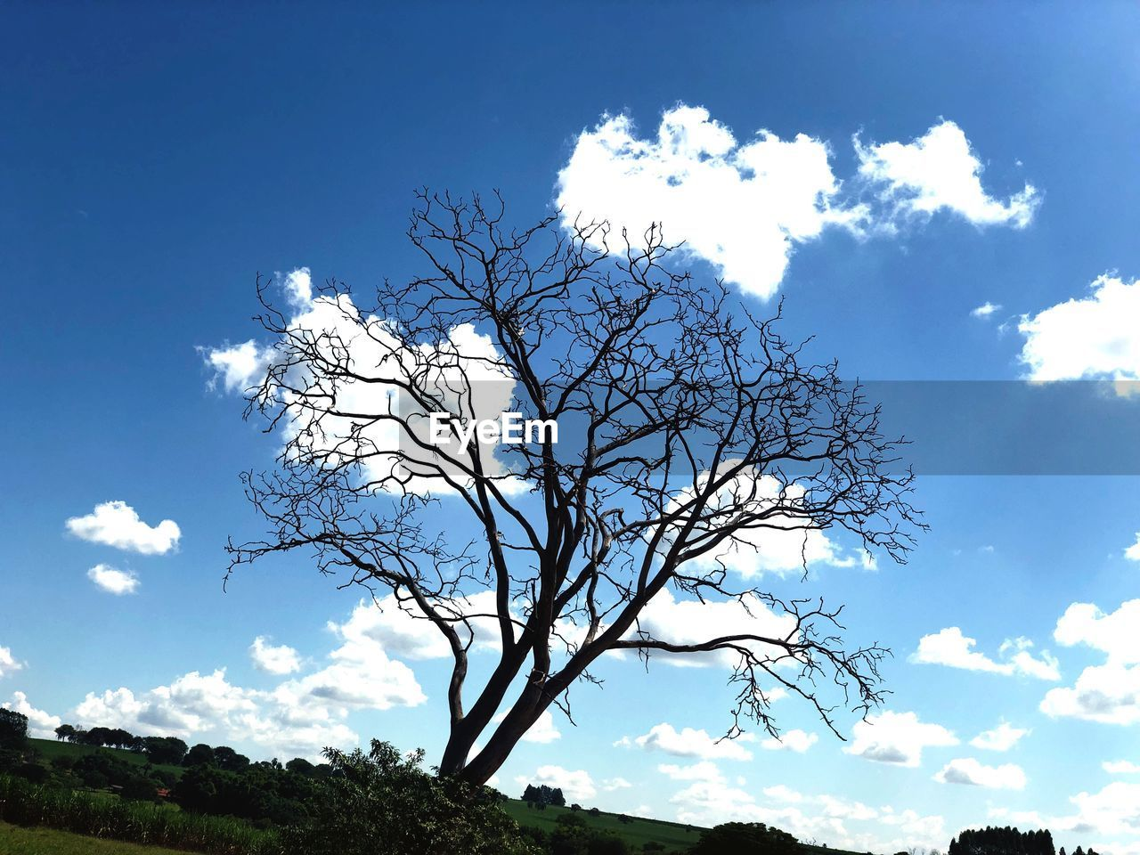 sky, cloud - sky, tree, plant, low angle view, tranquility, beauty in nature, nature, day, branch, bare tree, scenics - nature, no people, blue, tranquil scene, outdoors, sunlight, growth, silhouette, non-urban scene