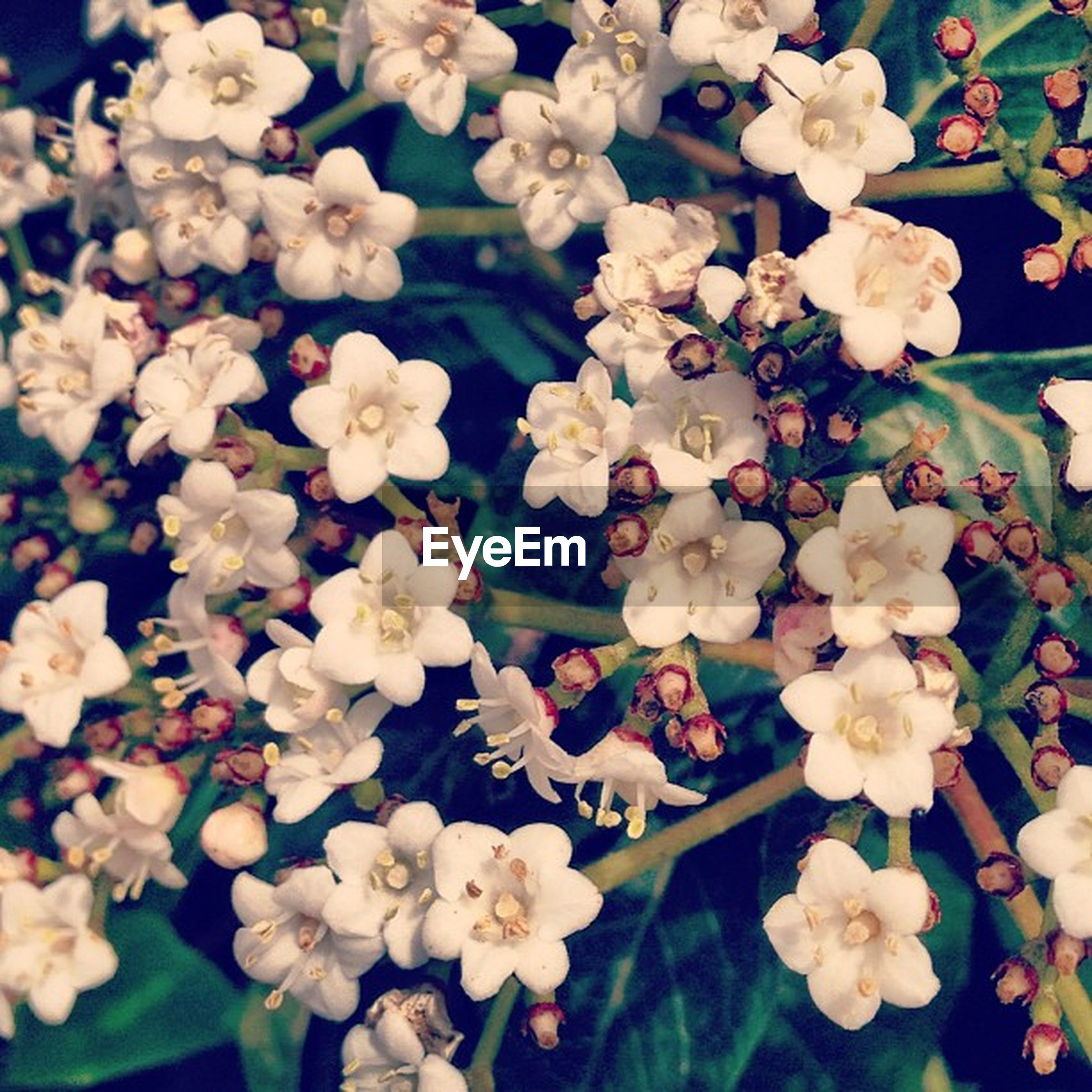 flower, freshness, petal, fragility, flower head, growth, beauty in nature, white color, blooming, nature, plant, abundance, high angle view, in bloom, full frame, blossom, backgrounds, close-up, park - man made space, botany
