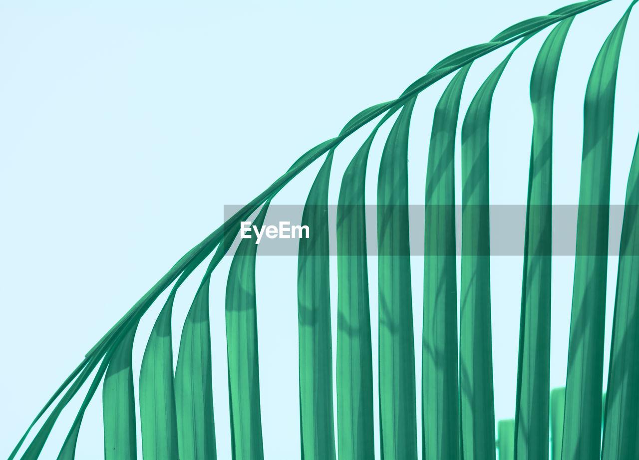 Close-Up Of Palm Leaf Against Blue Sky